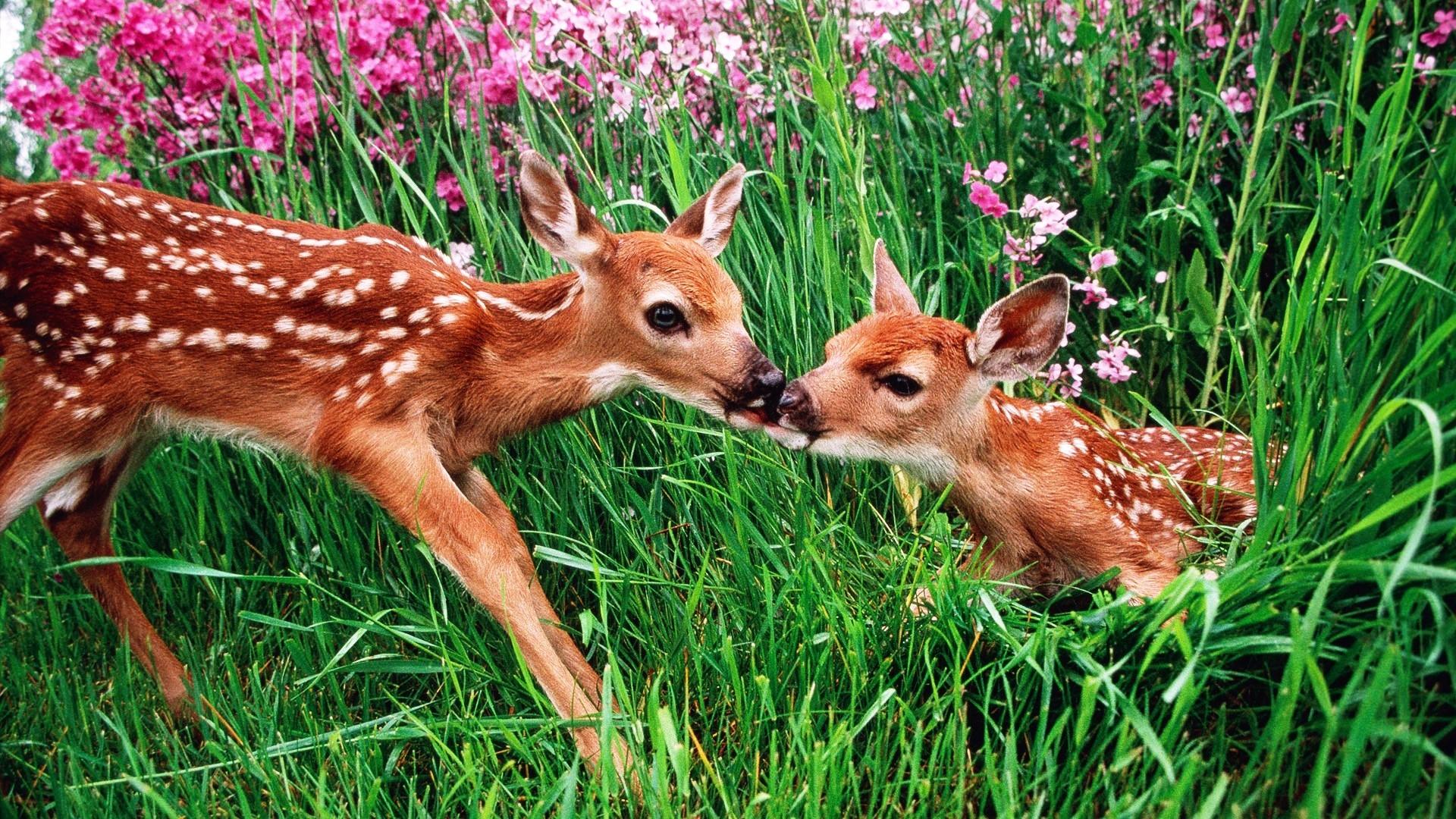 spring animals desktop wallpaper (51+ images)