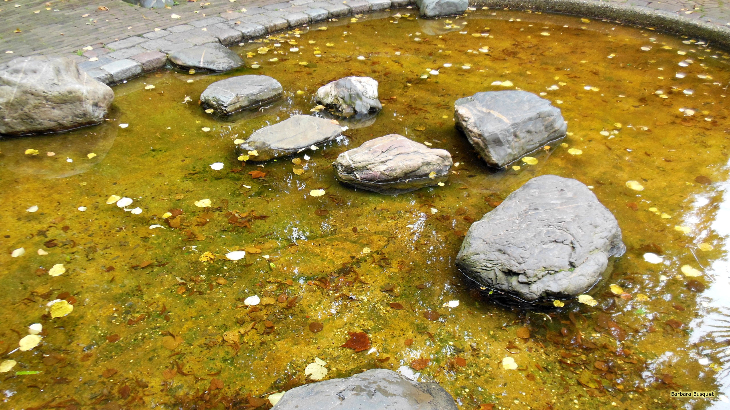 2560x1440 Pond with big rocks and leaves