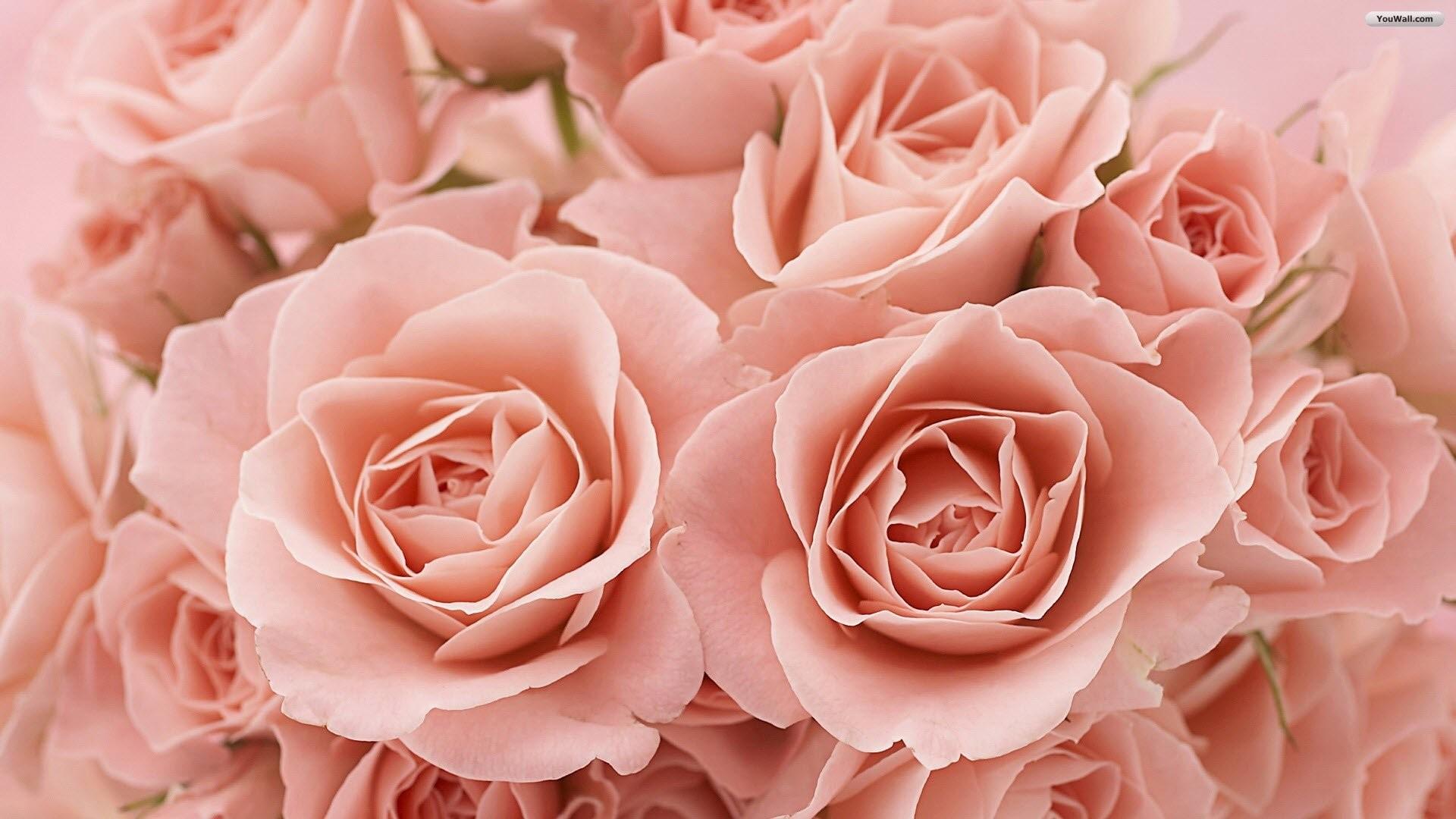 Light Pink Flower Wallpaper 54 Images