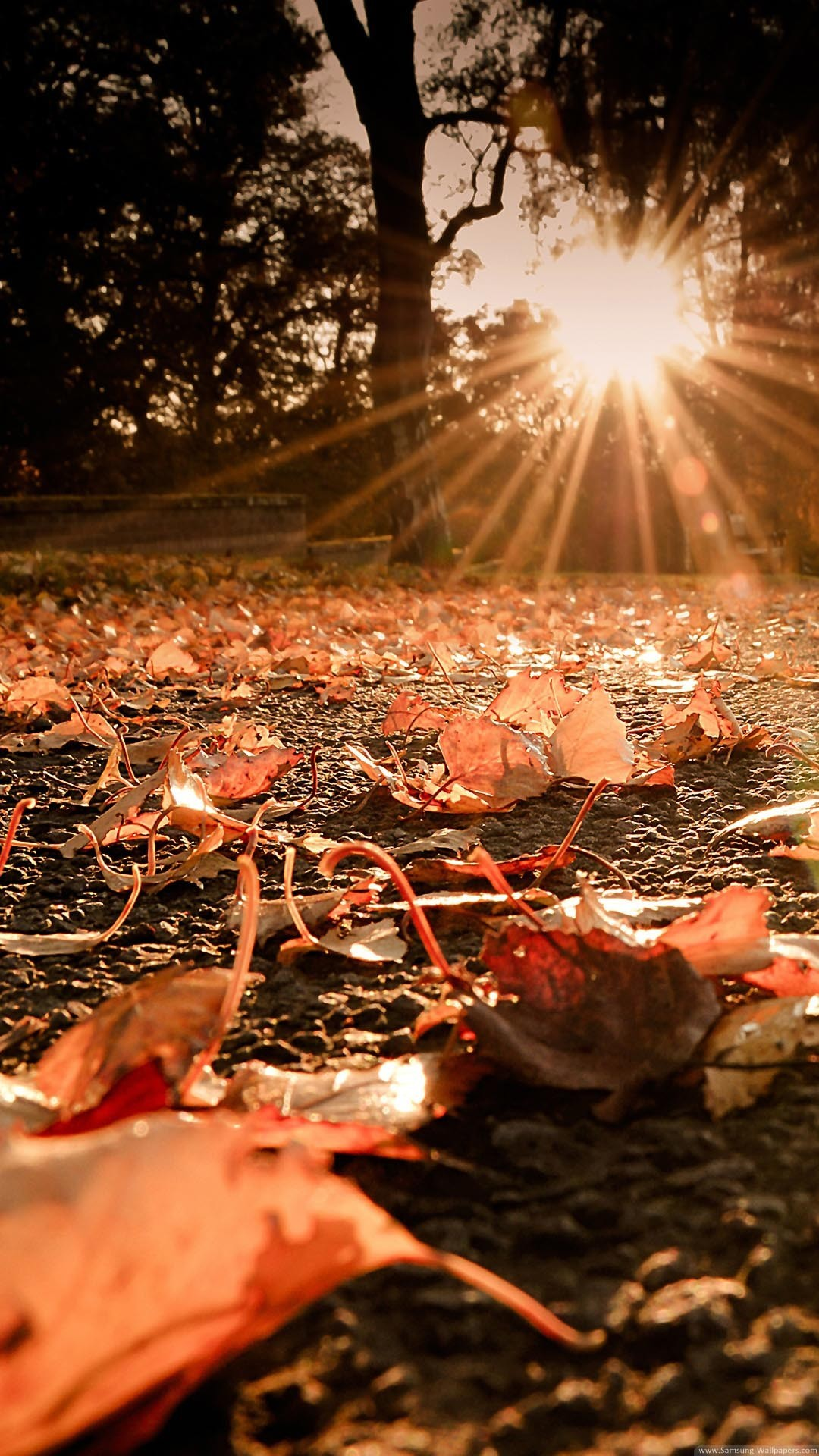 Screensavers And Wallpaper Autumn Scene 53 Images