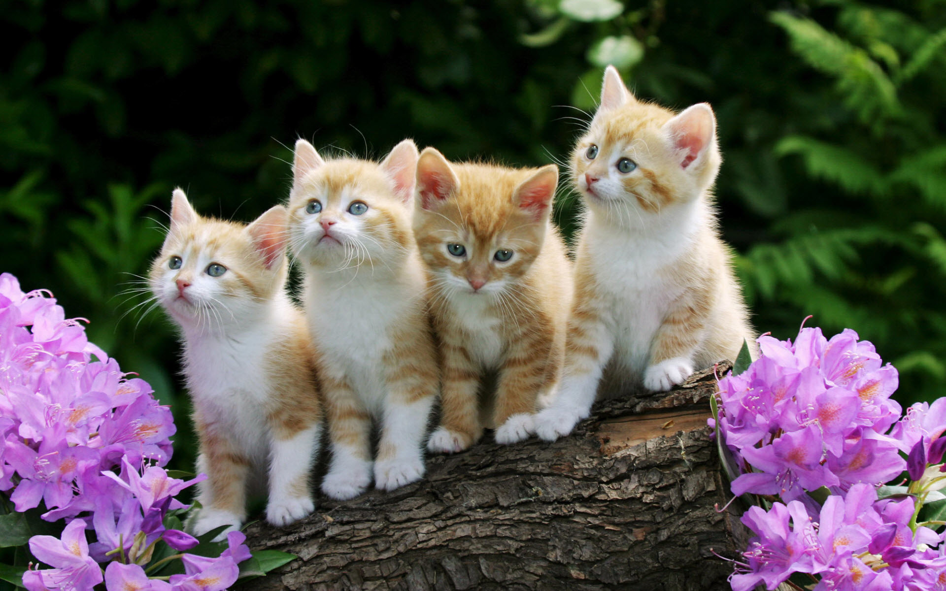 1920x1200 Curious Kittens Wallpapers | HD Wallpapers
