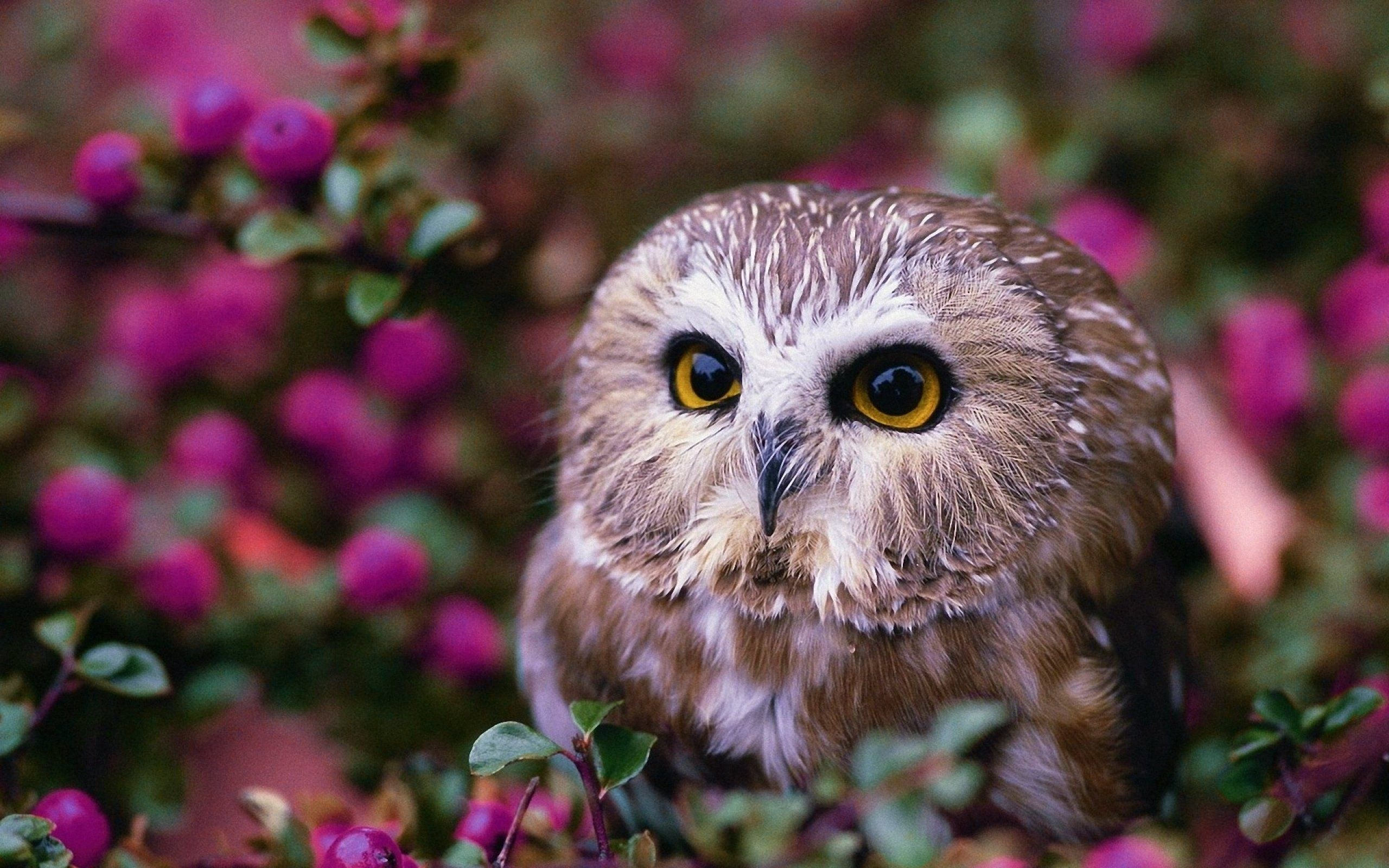 Cute Owl Wallpapers (65+ images)