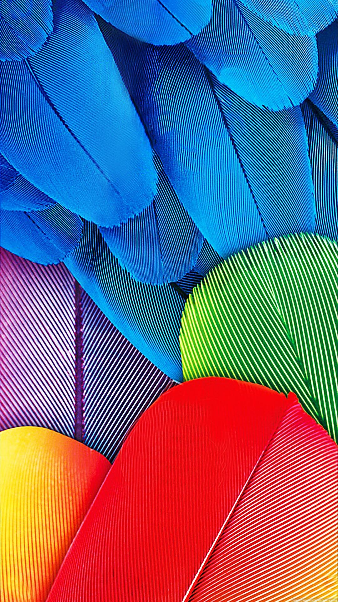 1080x1920 Color Feathers Stock  Samsung Galaxy S5 Wallpaper HD