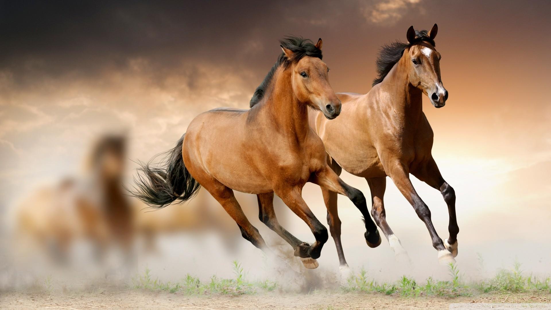 Horses Wallpaper 58 Images