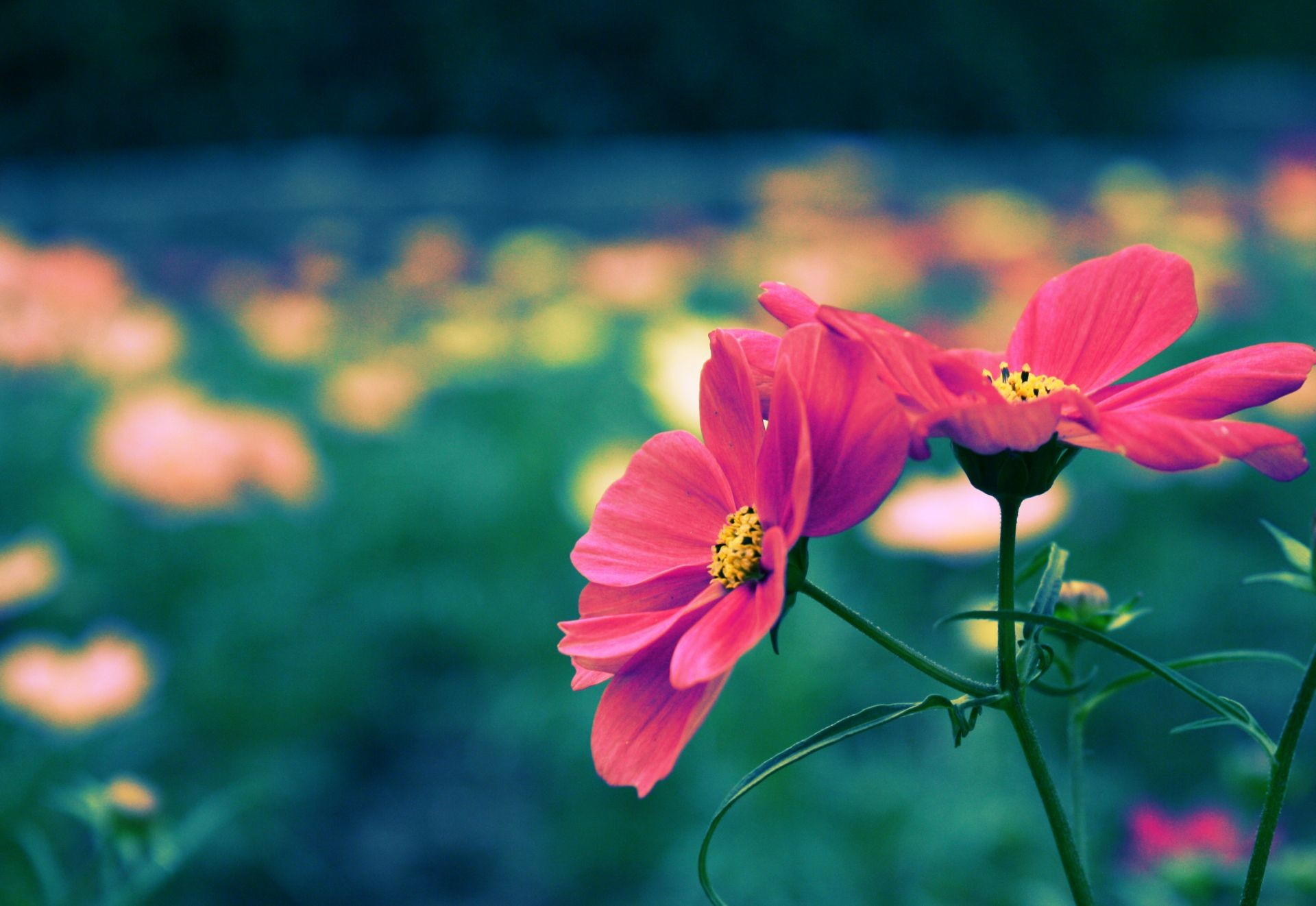 Pretty Flower Background (52+ images)