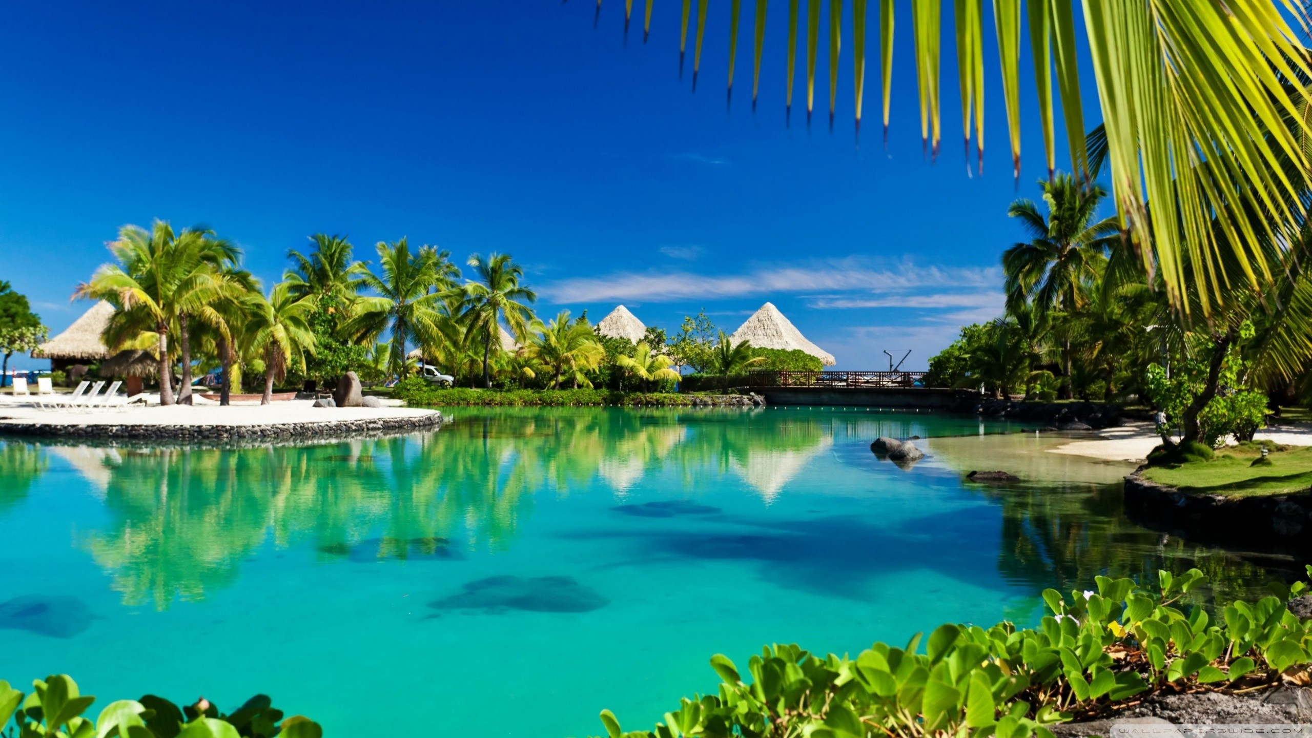 High definition tropical wallpapers 63 images - Wallpaper definition ...