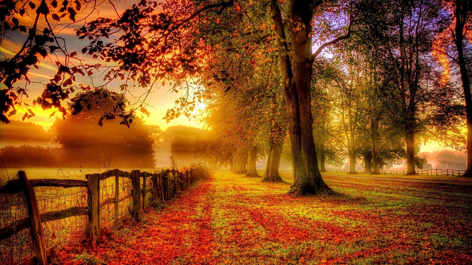 Sunset Trees Autumn I Love Nature Landscape HD POSTER