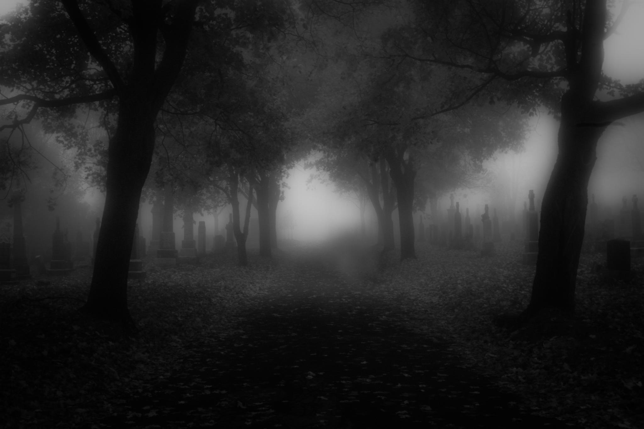 Black Metal Forest Wallpaper Download