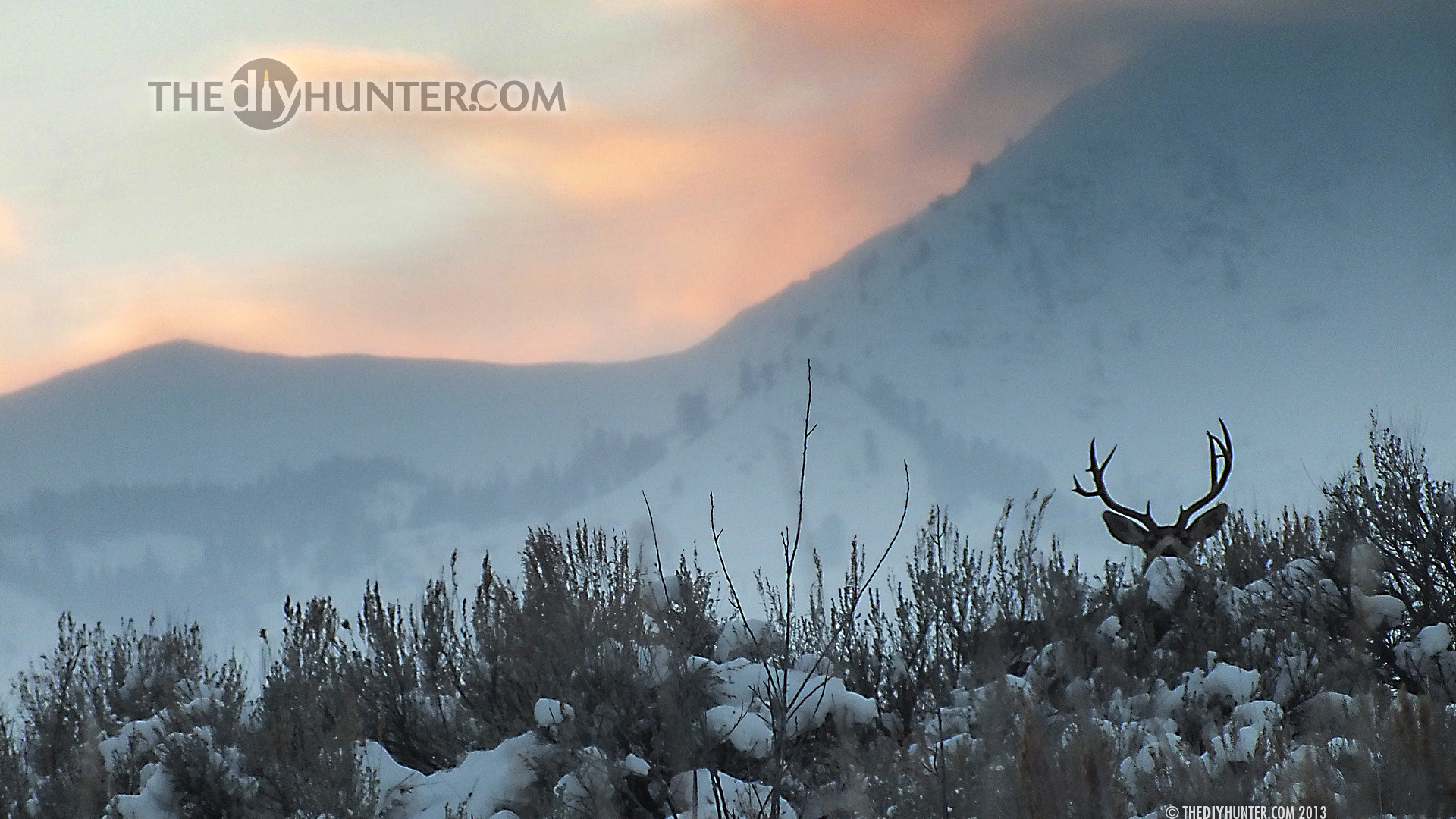 Big Buck Wallpaper Desktop 48  images