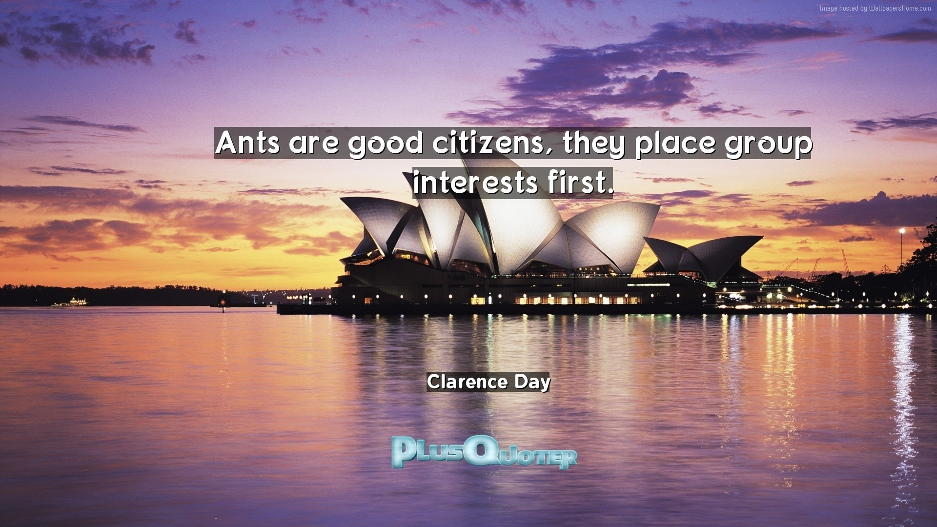 "1920x1080 Download Wallpaper with inspirational Quotes- ""Ants are good citizens, they  place group interests"