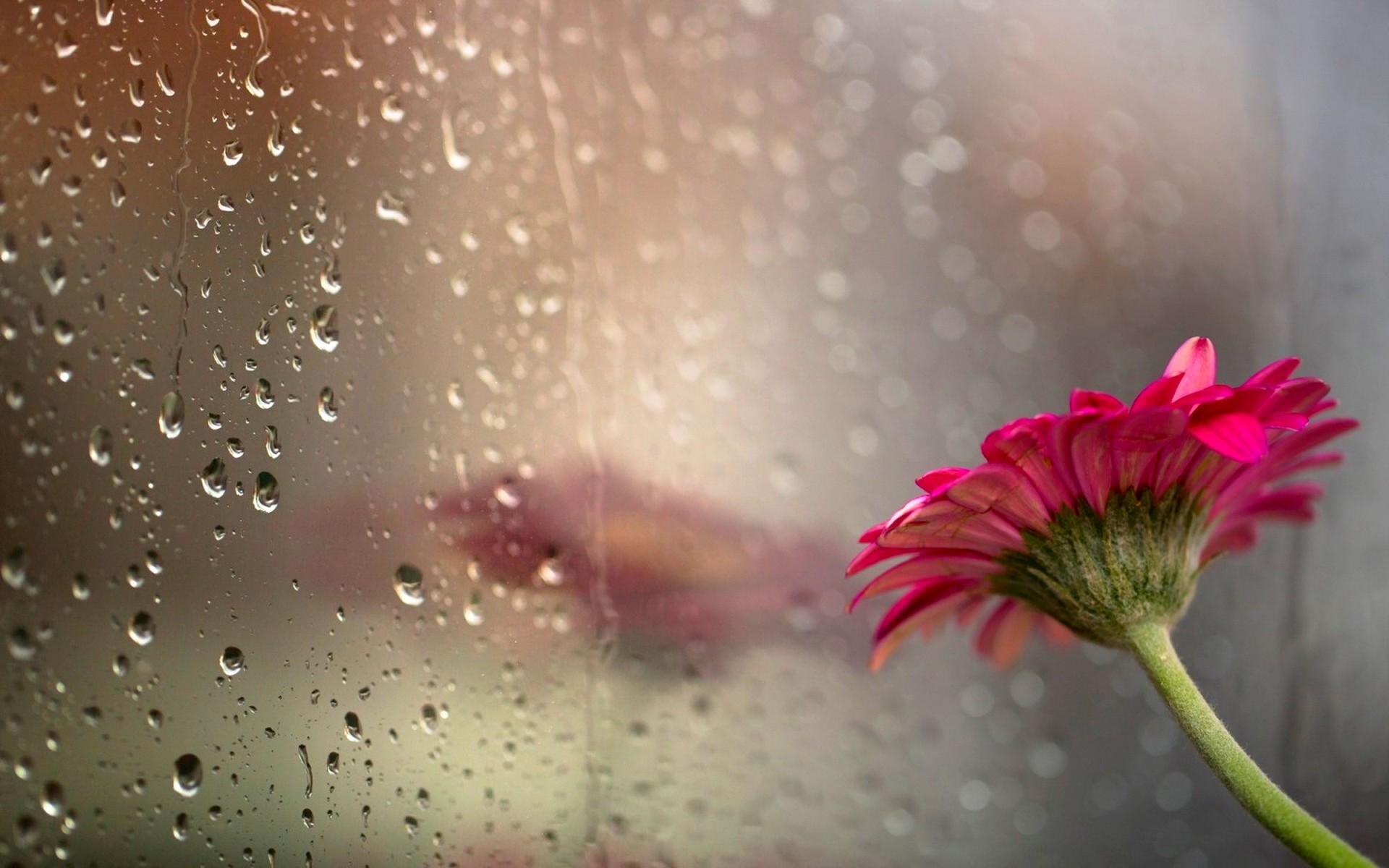 1920x1200 Beautiful Rain Wallpaper 39849