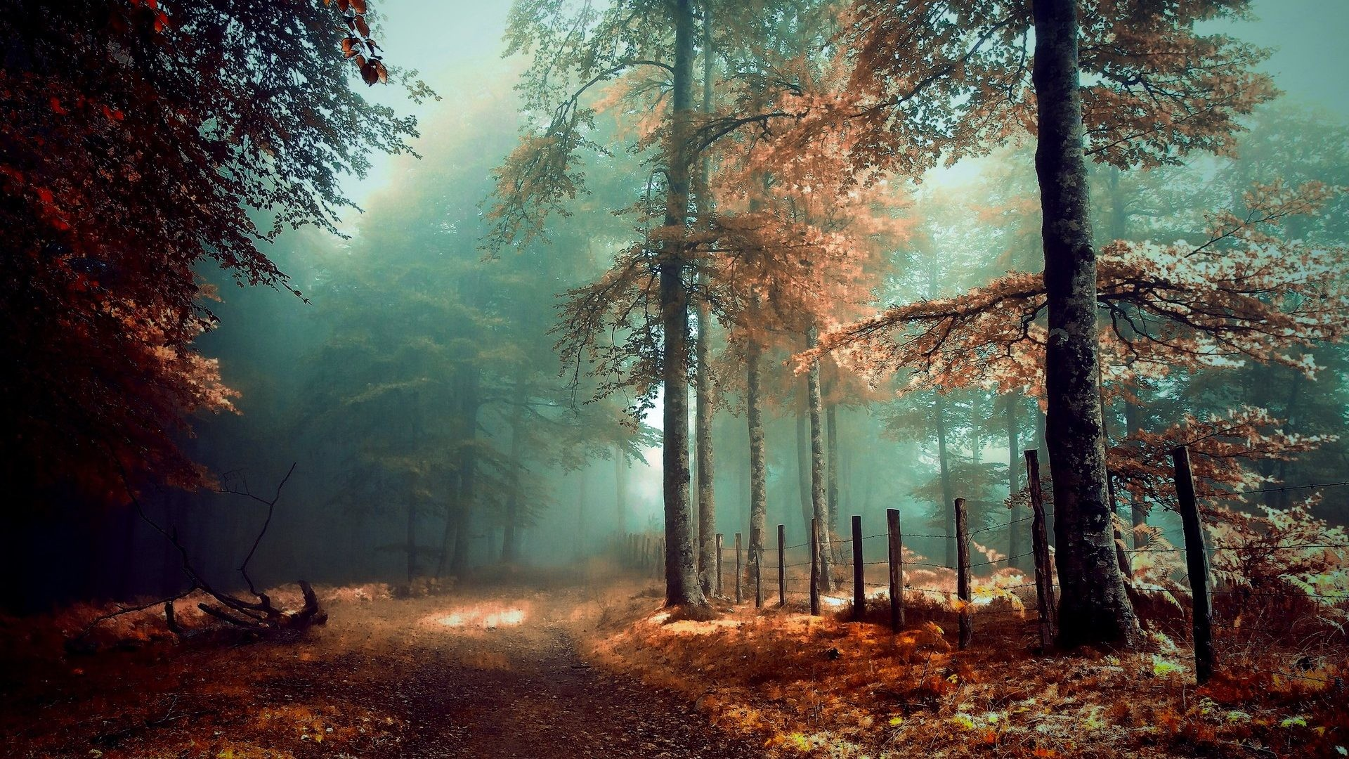 Beautiful Forest Wallpapers 39 Images