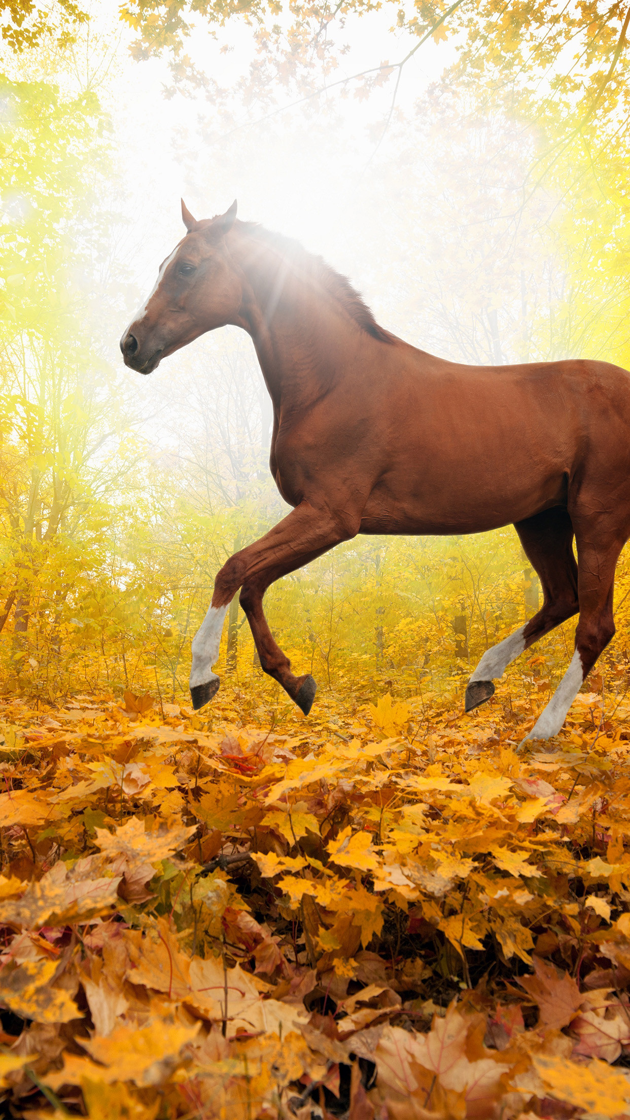Fall Horse Wallpaper 42 Images