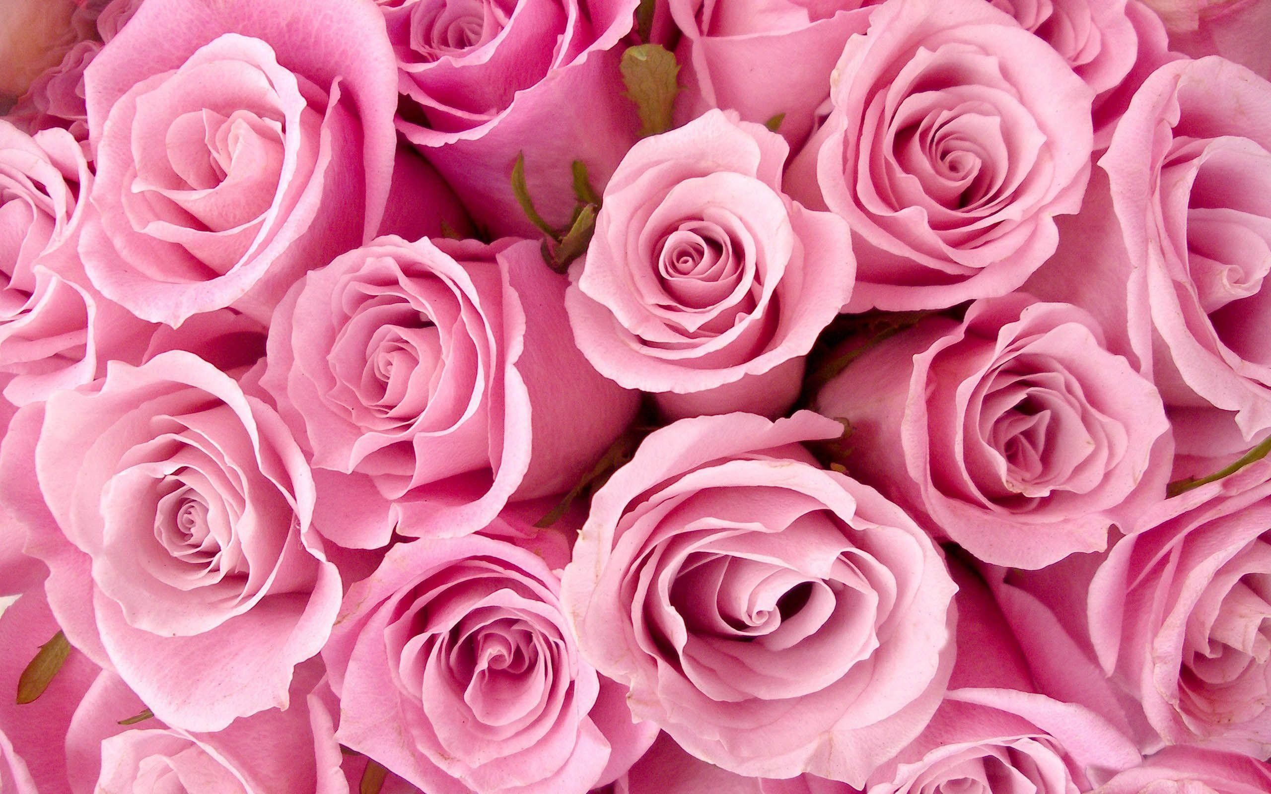 2560x1600 Flowers: Astonishing Pretty Pink Background HD Wallpapers, | Image .
