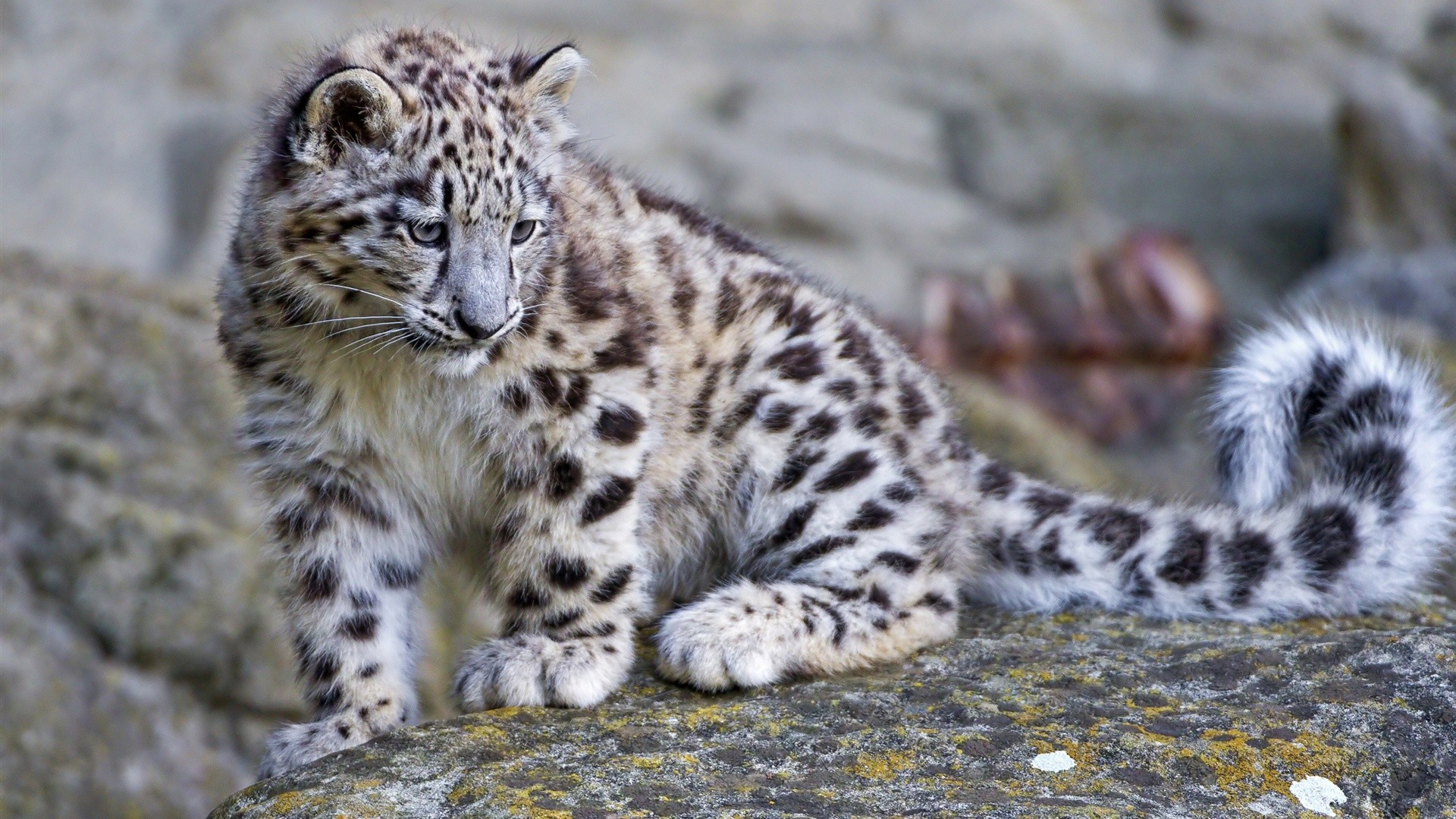 Mac Os X Snow Leopard Iso Download