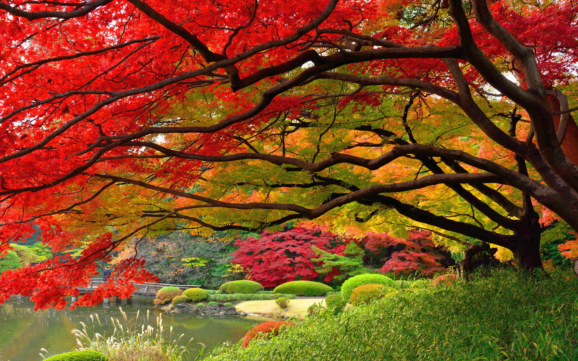 1920x1200 autumn-wallpaper-japan-hd Autumn Wallpaper Examples for Your Desktop  Background