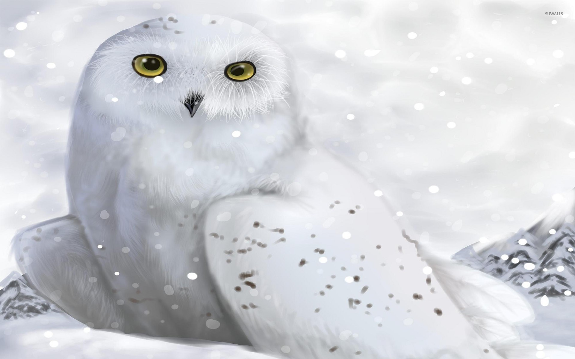 1920x1200 Animals Birds Owl Wallpapers HD Desktop And Mobile Backgrounds