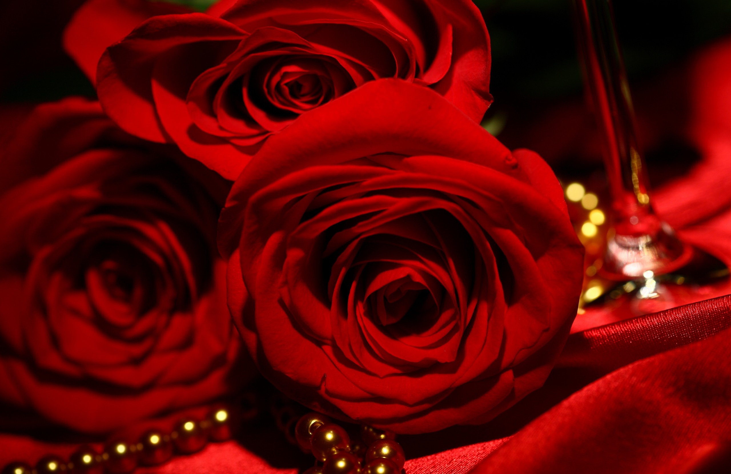 red rose wallpaper (72+ images)