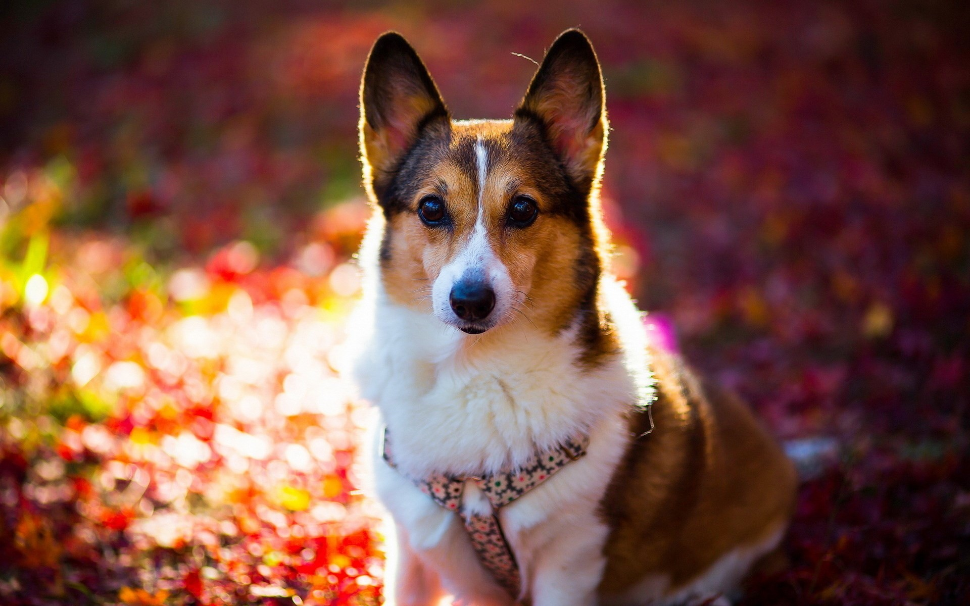 Cute Dog Wallpapers 64 Images