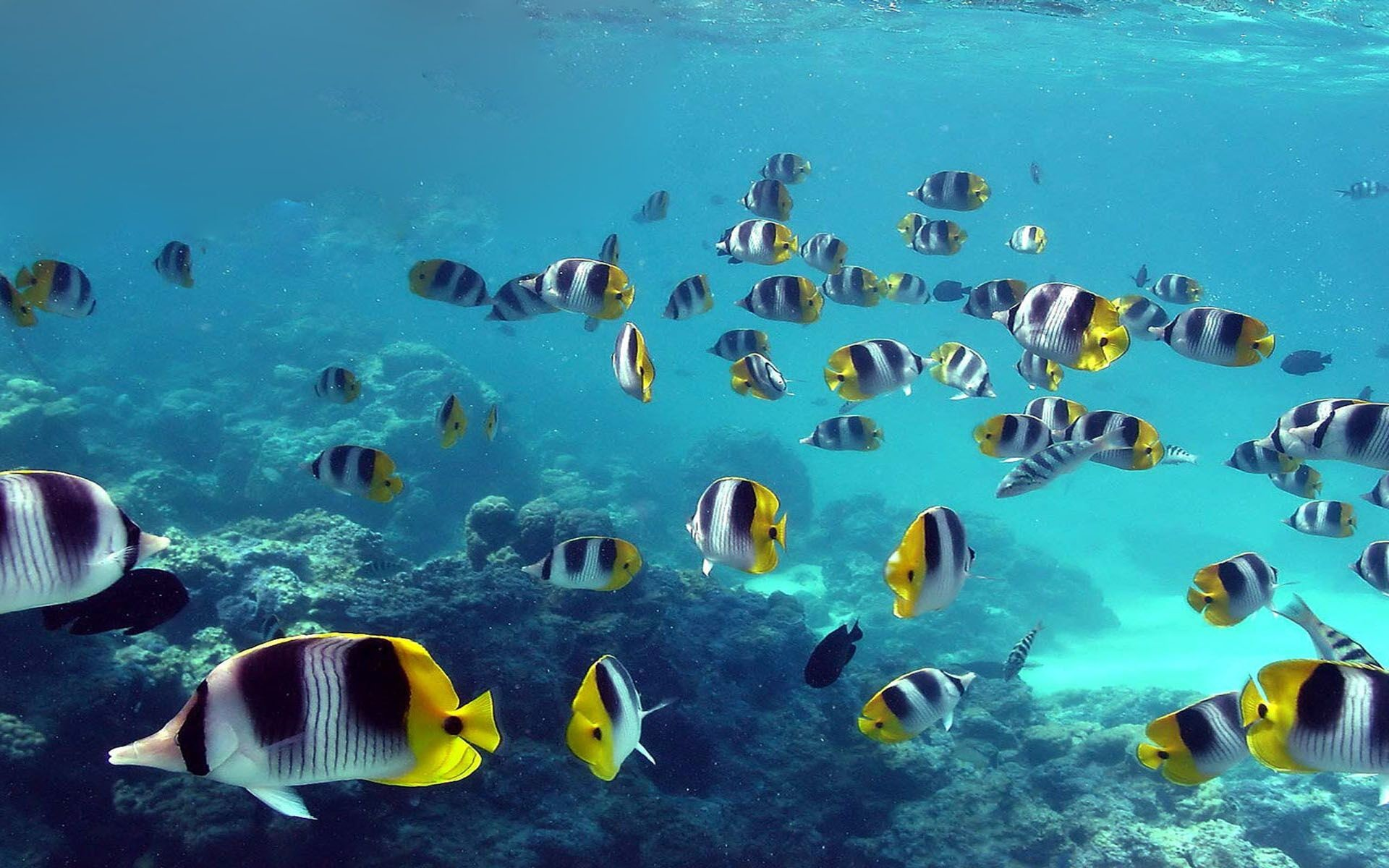 1920x1200 Beautiful Ocean Fish HD Wallpaper - 1939995