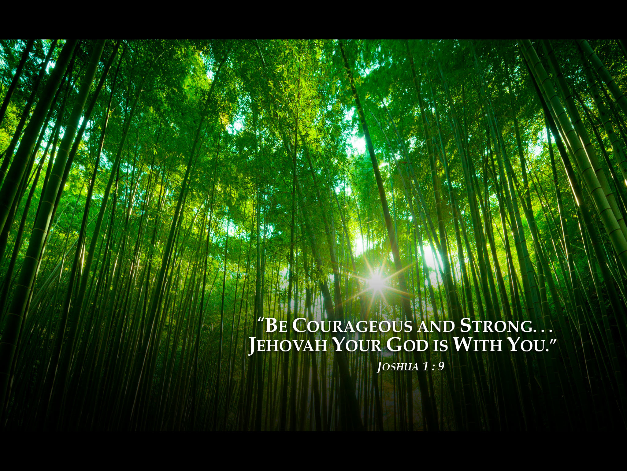 Ipad Iphone Hd Wallpaper Free: Jw Org Wallpaper Desktop (64+ Images