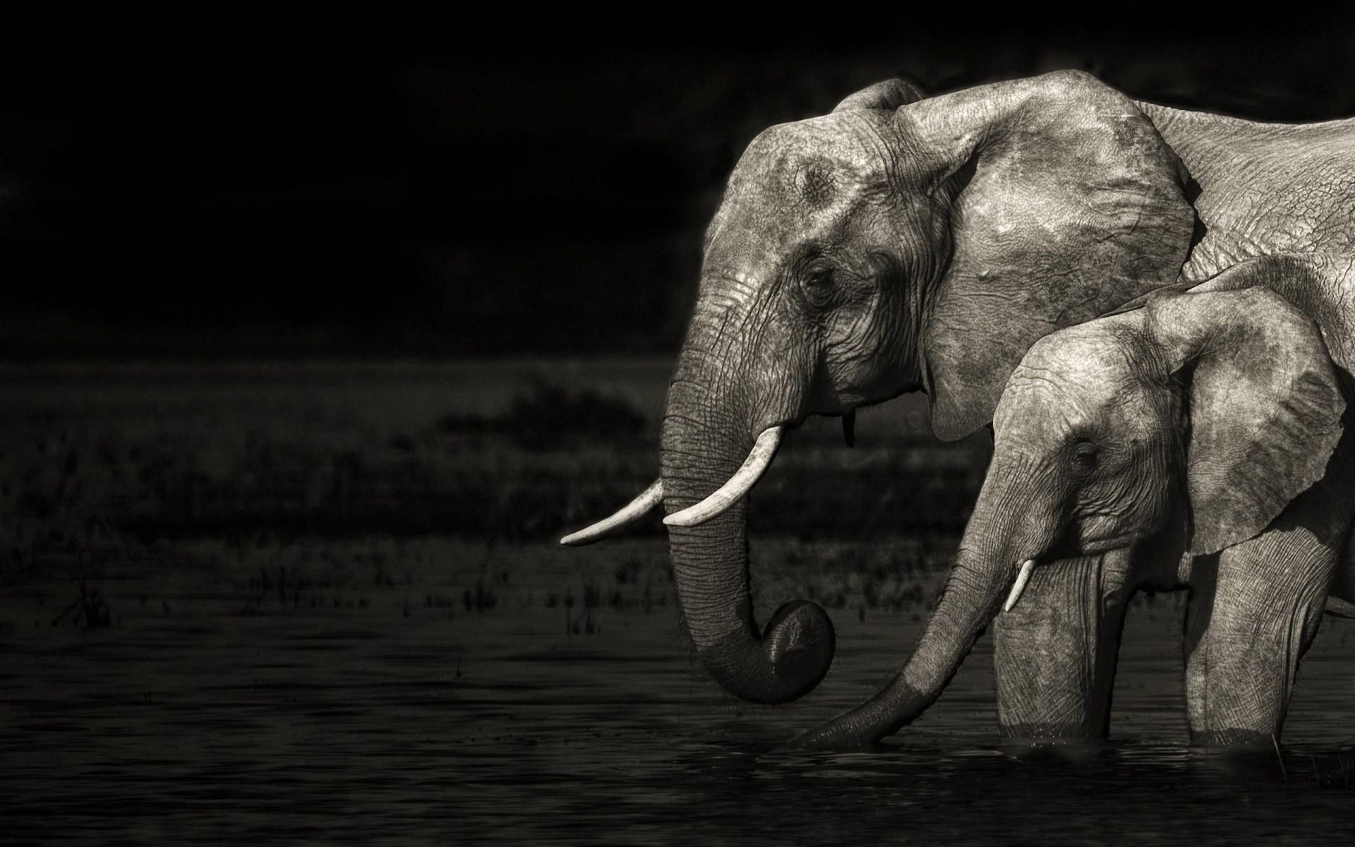 Tribal Elephant Wallpaper (59+ images)