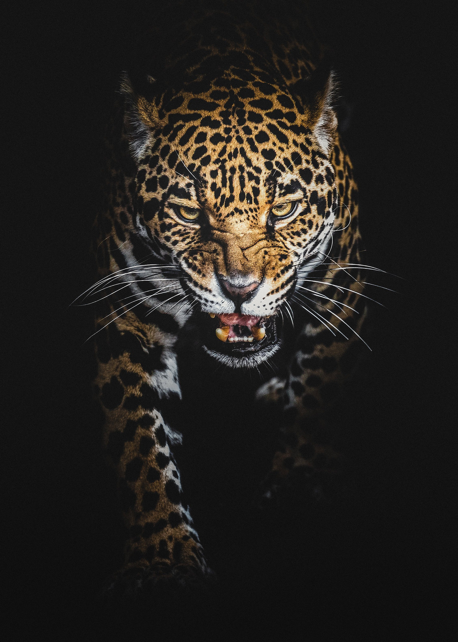 Black leopard background 58 images - Jaguar animal hd wallpapers ...
