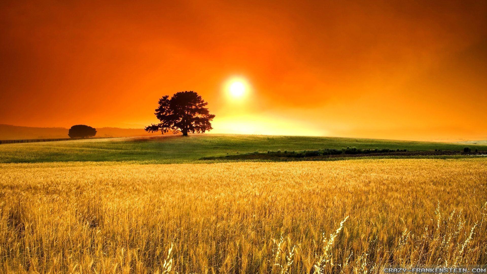 Beautiful Sunny Day wallpaper | 2560x1600 | #29420  |Sunny Beautiful Day