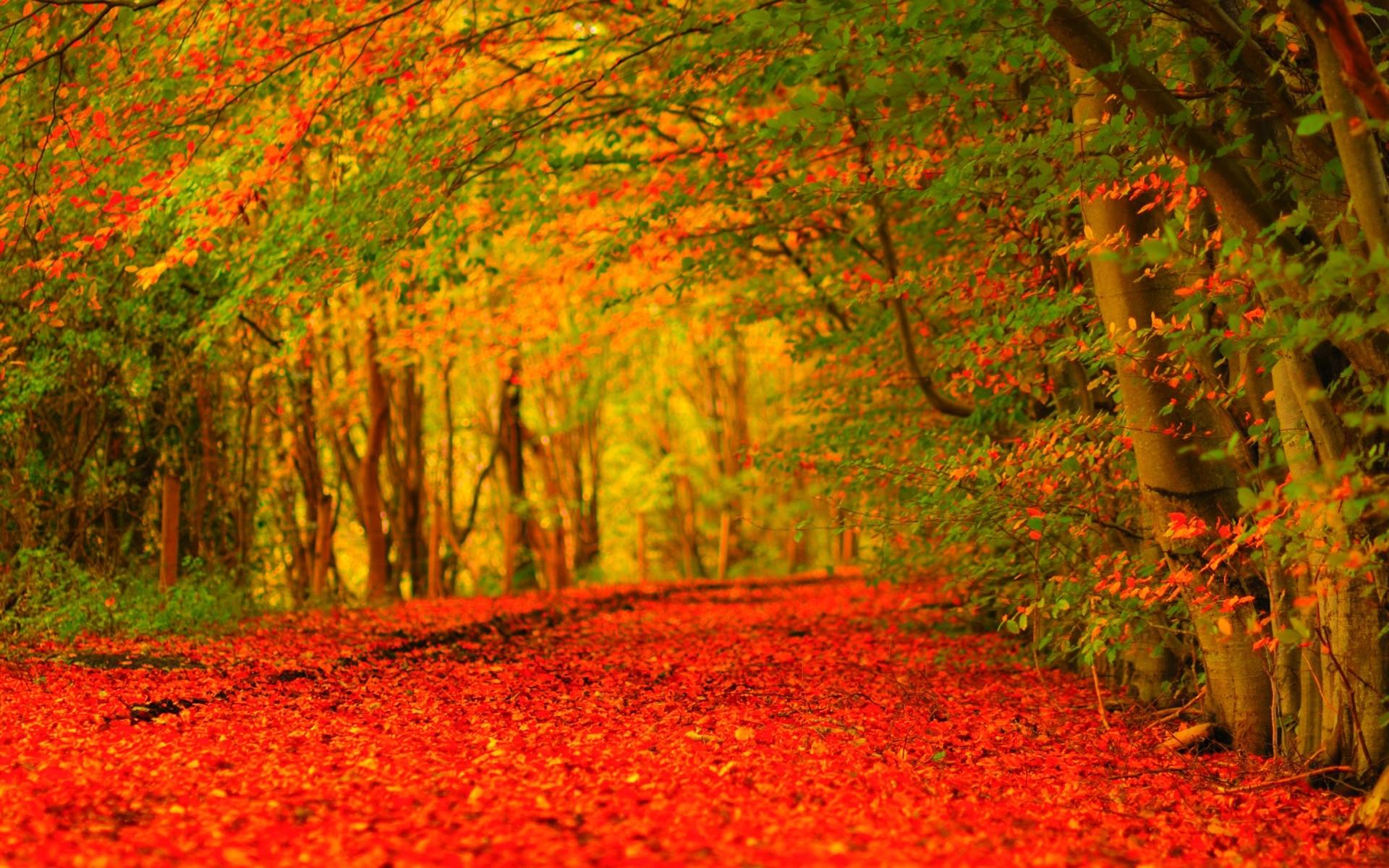 Autumn Screensavers Wallpaper (57+ images)