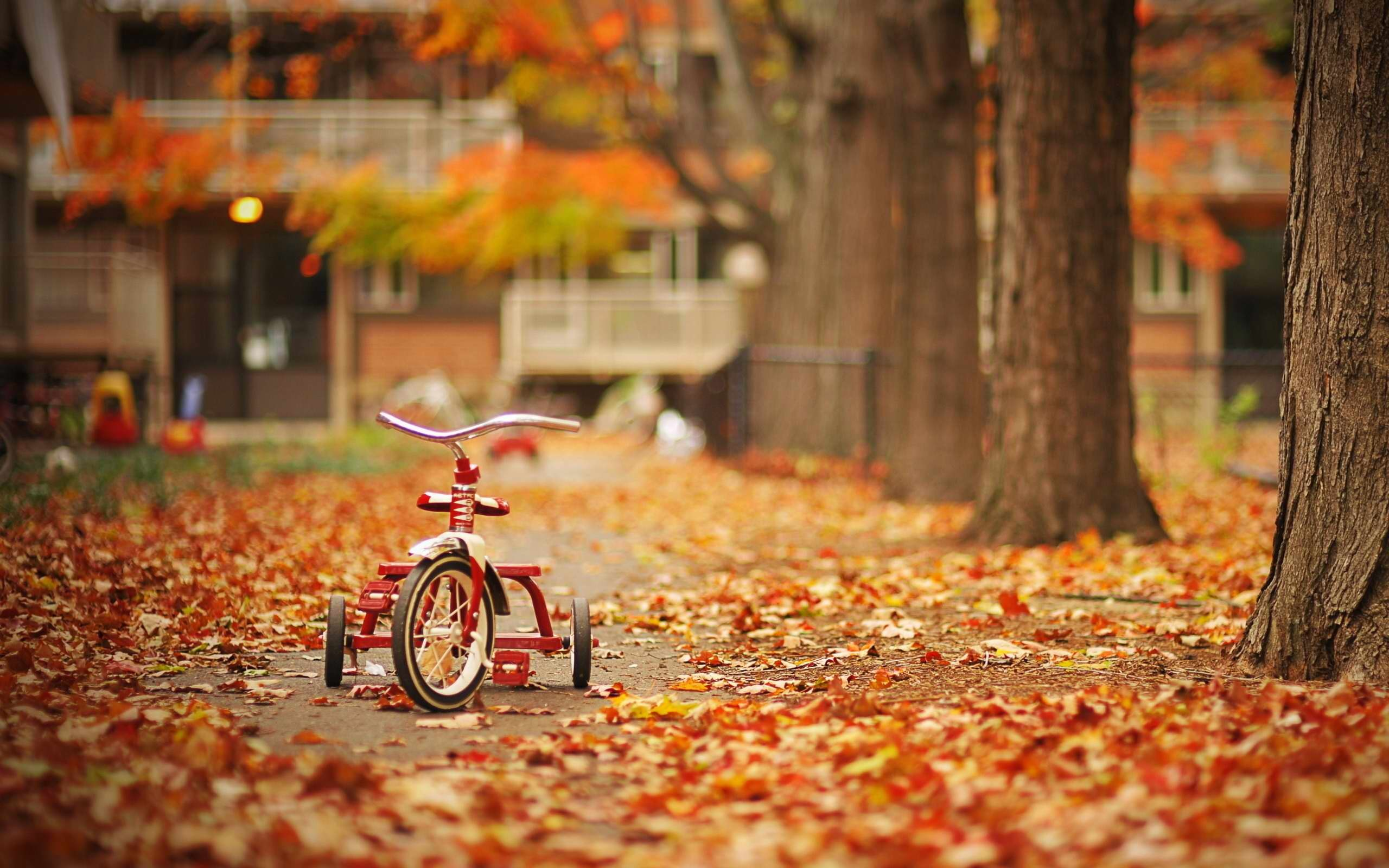 2560x1600 Fall Season, wallpaper, Fall Season hd wallpaper, background desktop