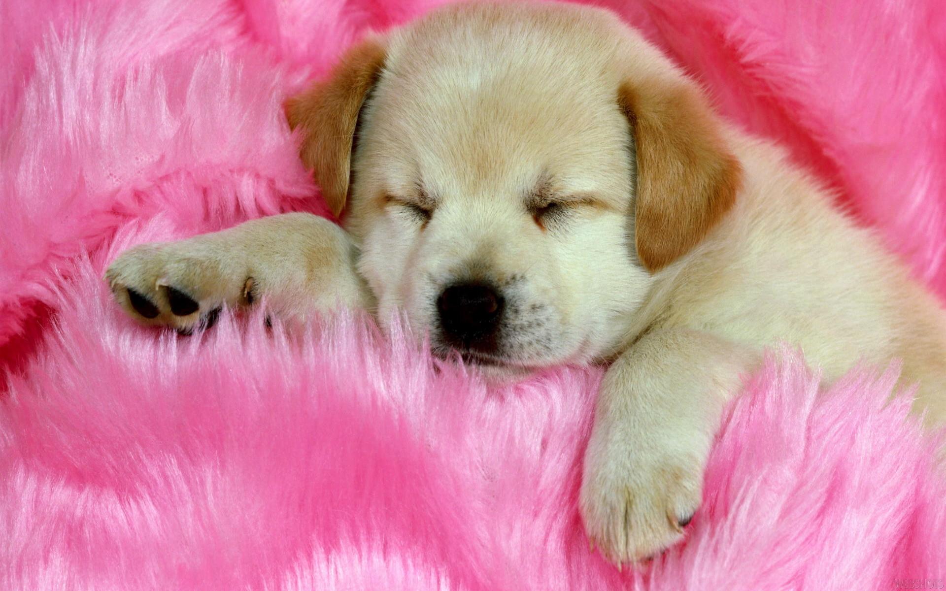 1920x1200 Cute Animal Free Wallpaper: Funny Cute Dog Sleep Hd Free Wallpaper  Source 1920x1200px