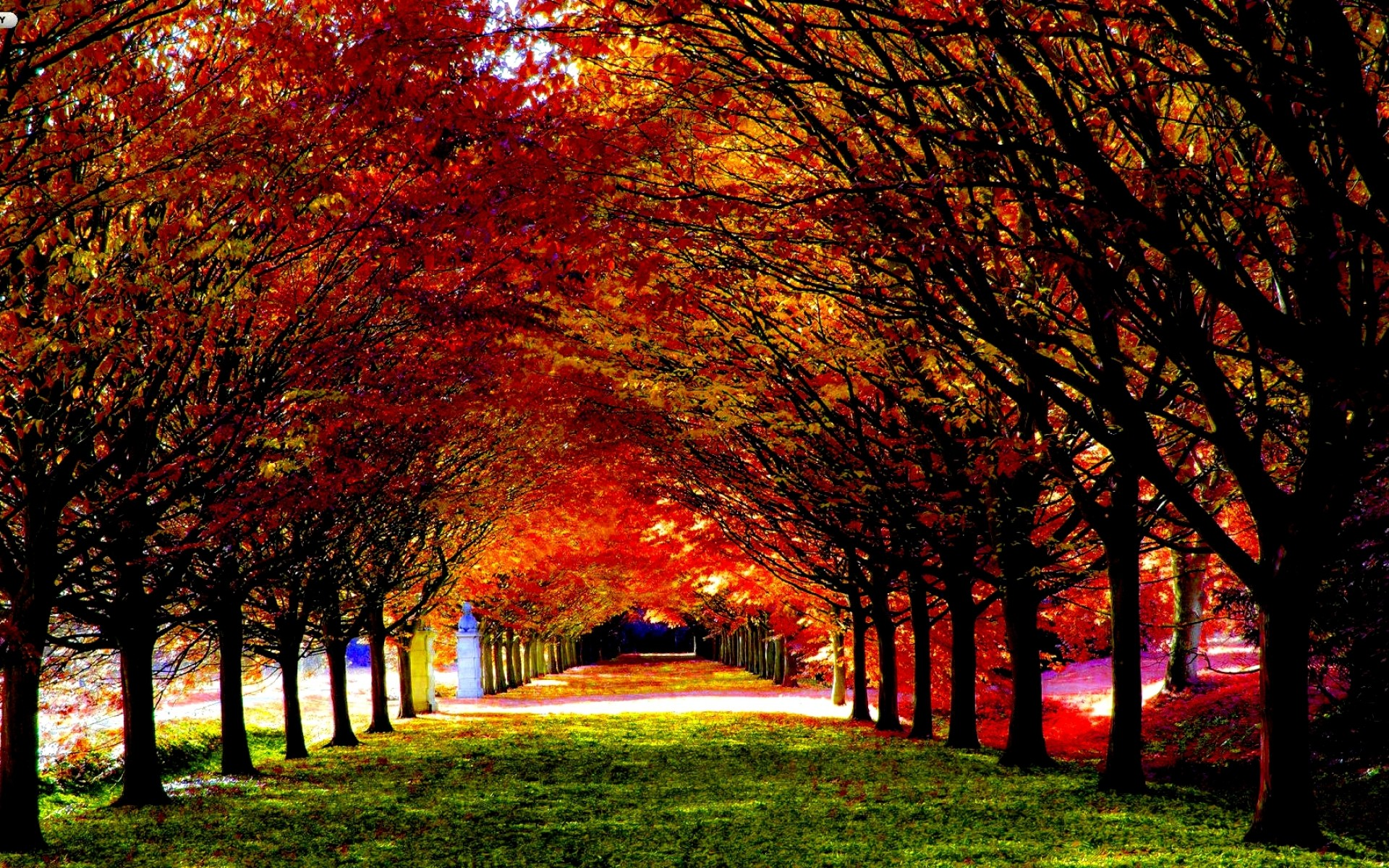 1920x1080 Other Autumn Nature Red Fire Bush Free Wallpapers For HD