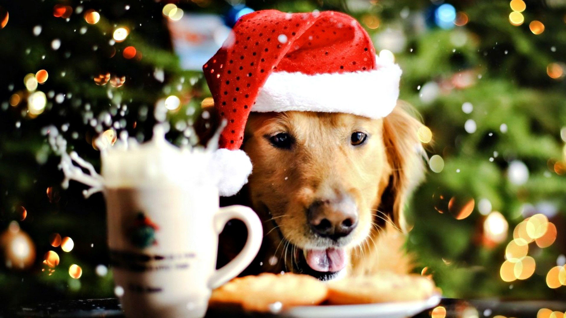 1920x1080 hd-pics-photos-attractive-christmas-dog-celebrations-decorations-