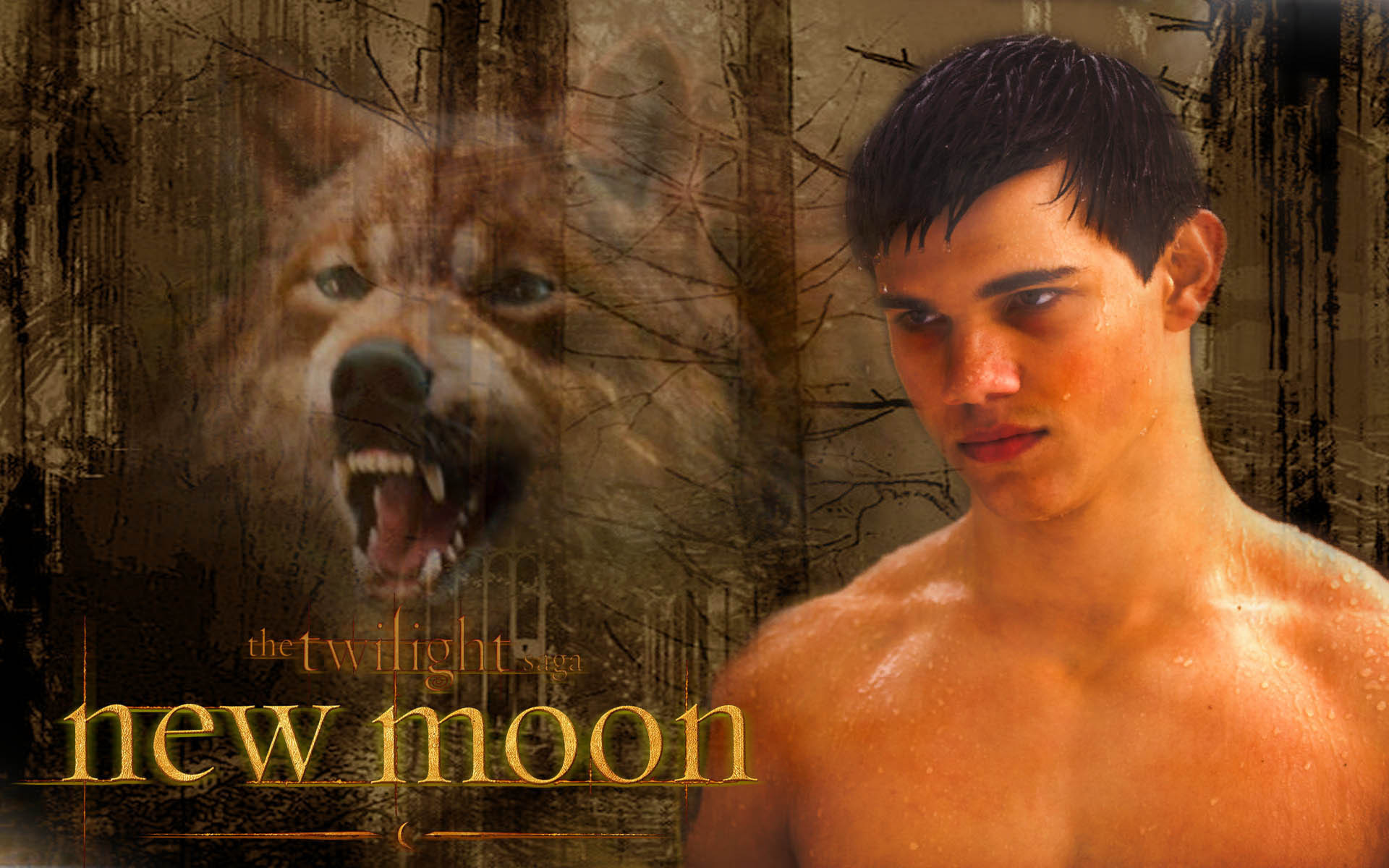 1920x1200  Jacob Black Wallpaper New Moon