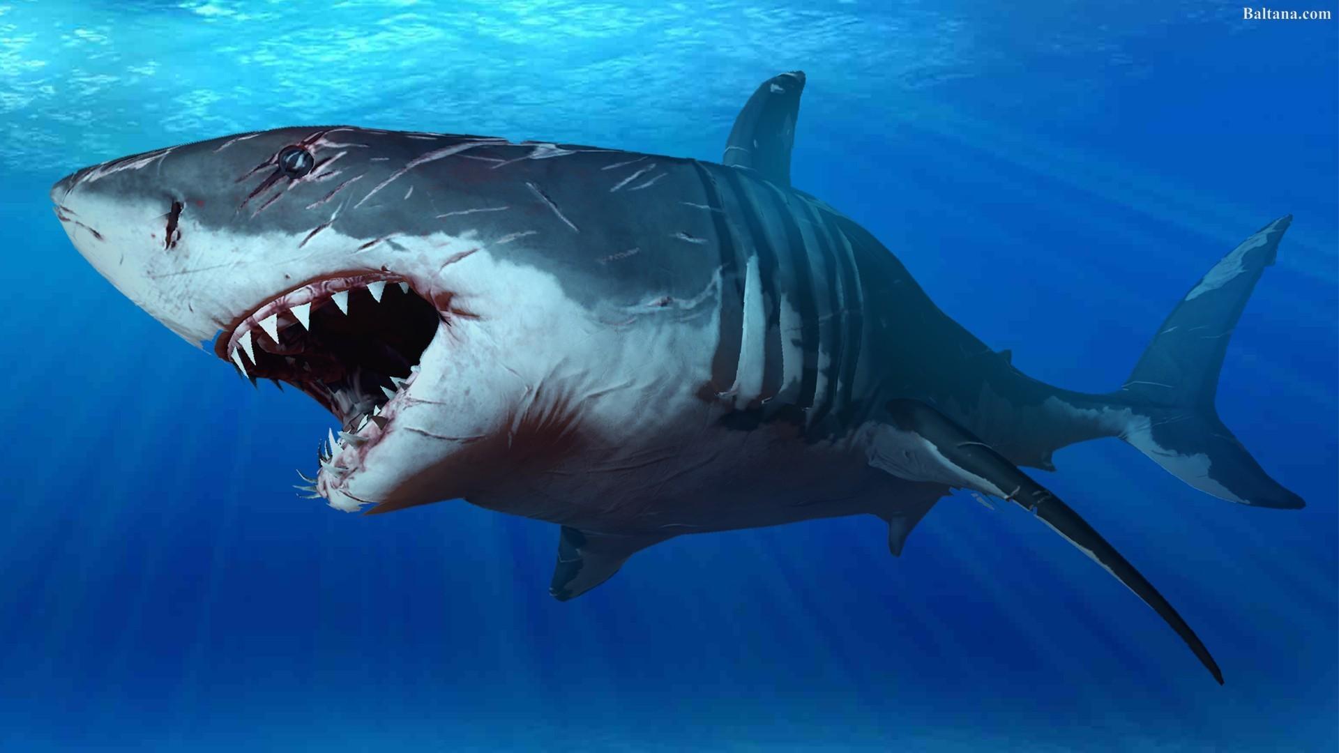 Shark Wallpaper 71 Images
