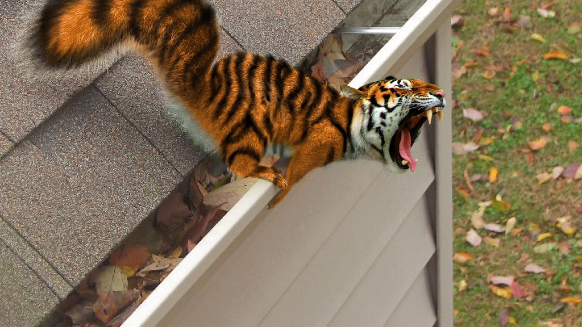 1920x1080 Squiger Tiger fangs funny Animal Wallpaper | HD Funny Wallpaper Free  Download ...