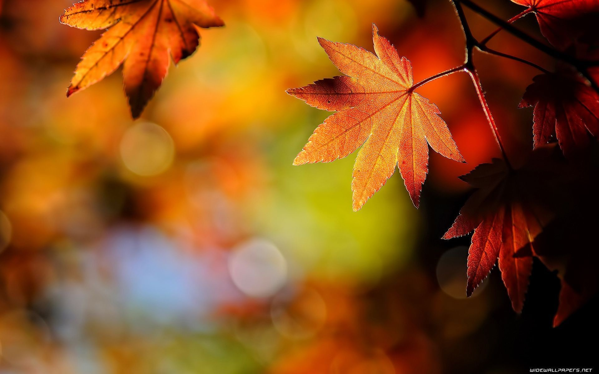 1920x1200 Wallpapers For > Fall Leaves Desktop Background Hd #8232