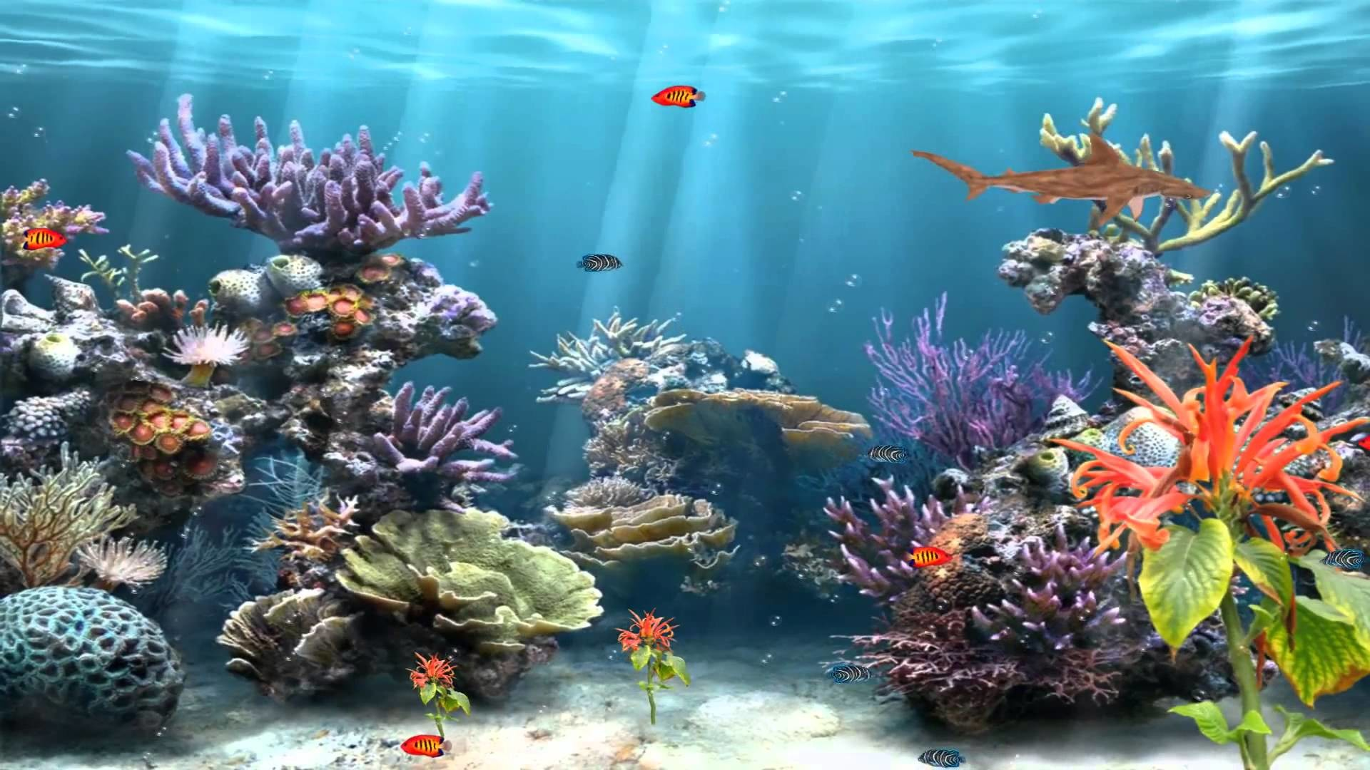 Coral reef backgrounds 54 images for Fish aquarium background