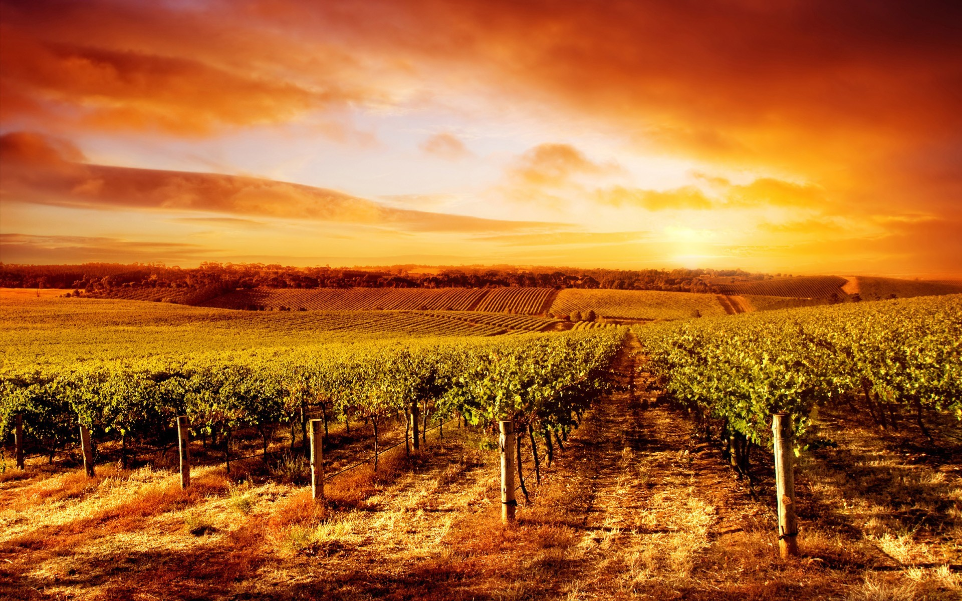 1920x1200 Vineyard HD Wallpaper | Background Image |  | ID:168613 - Wallpaper  Abyss