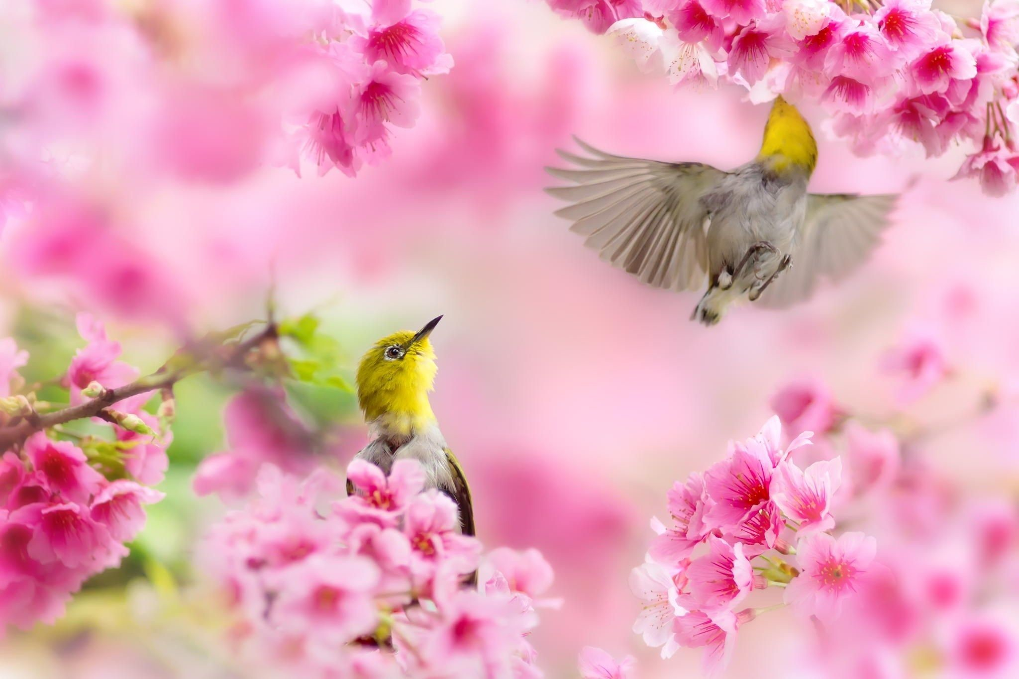 Spring Bird Desktop Wallpaper (81+ images)