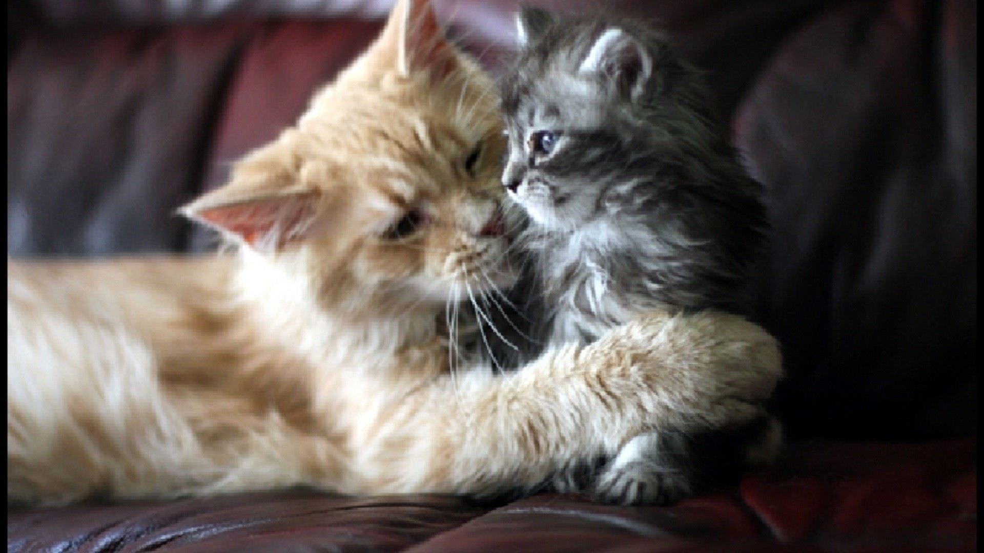Wallpaper cats and kittens 66 images - Free wallpaper of kittens ...