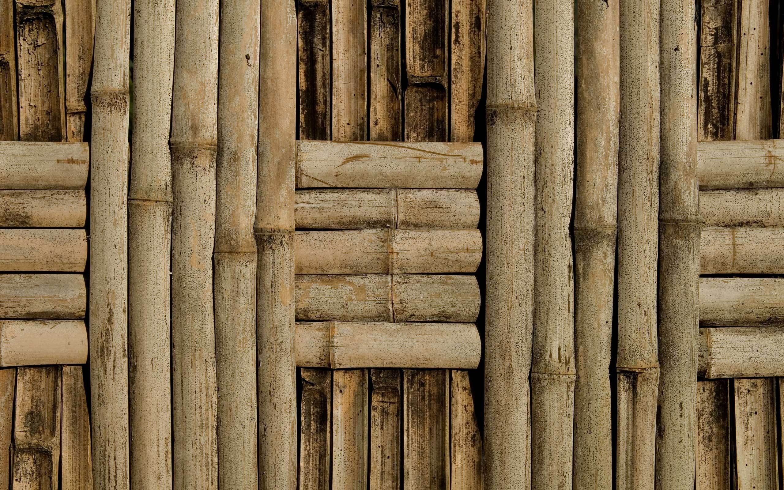 2560x1600 bamboo, texture bamboo , bamboo texture, photo, background