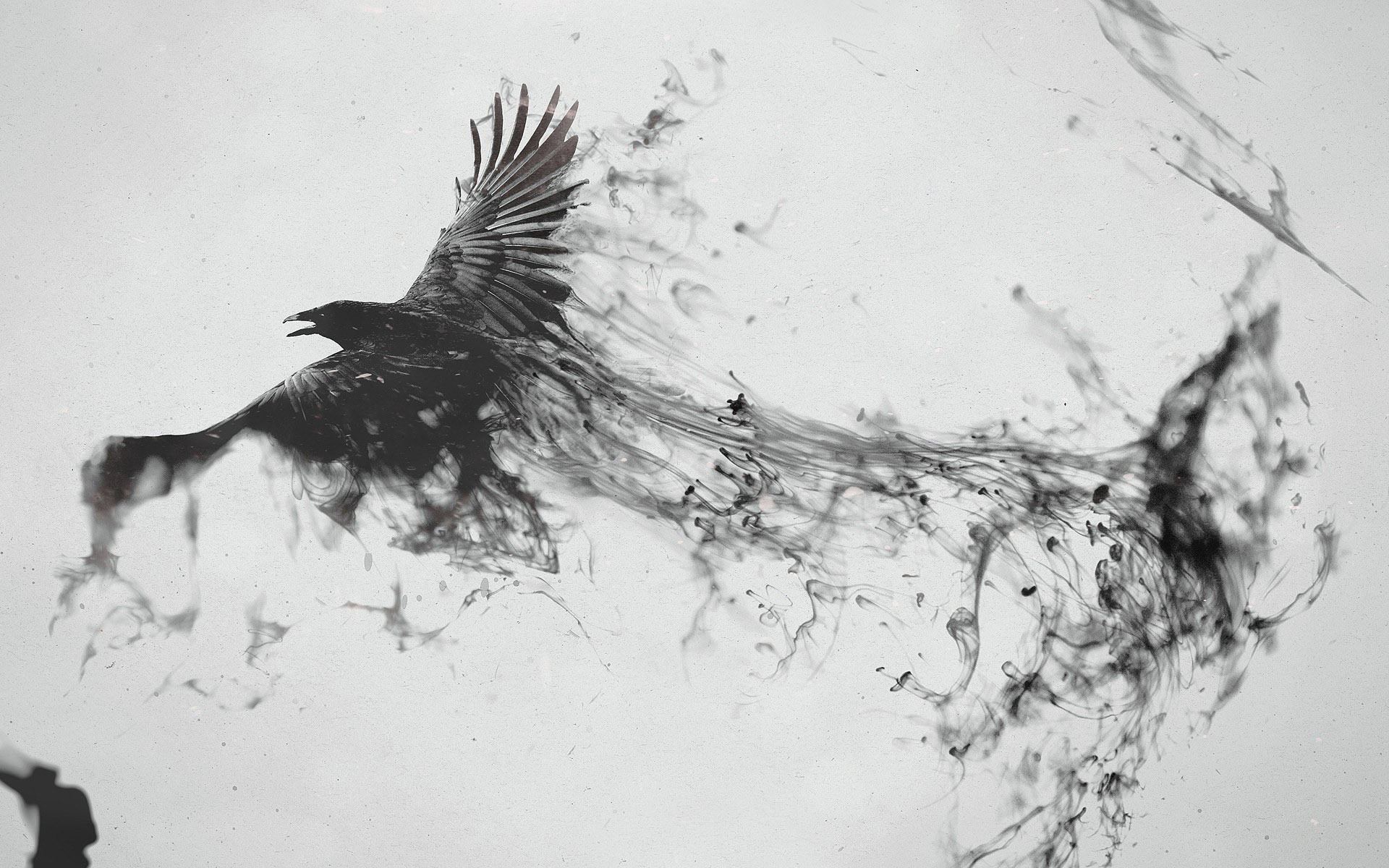 1920x1200 Crow Turning Into Smoke Wallpaper 14570