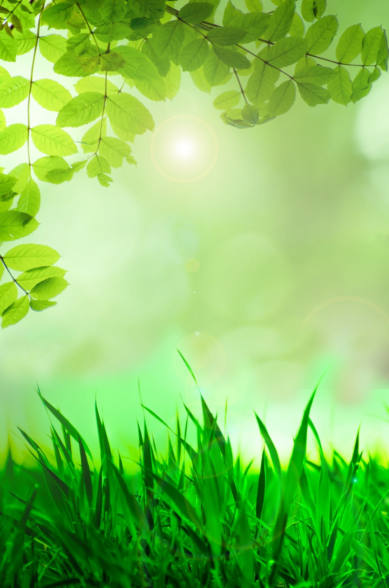 1271x1920 Natural Green Background