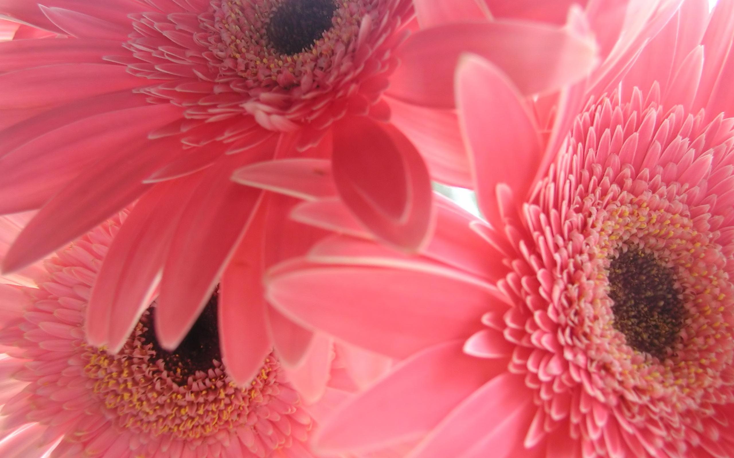 pink desktop wallpaper themes (47+ images)
