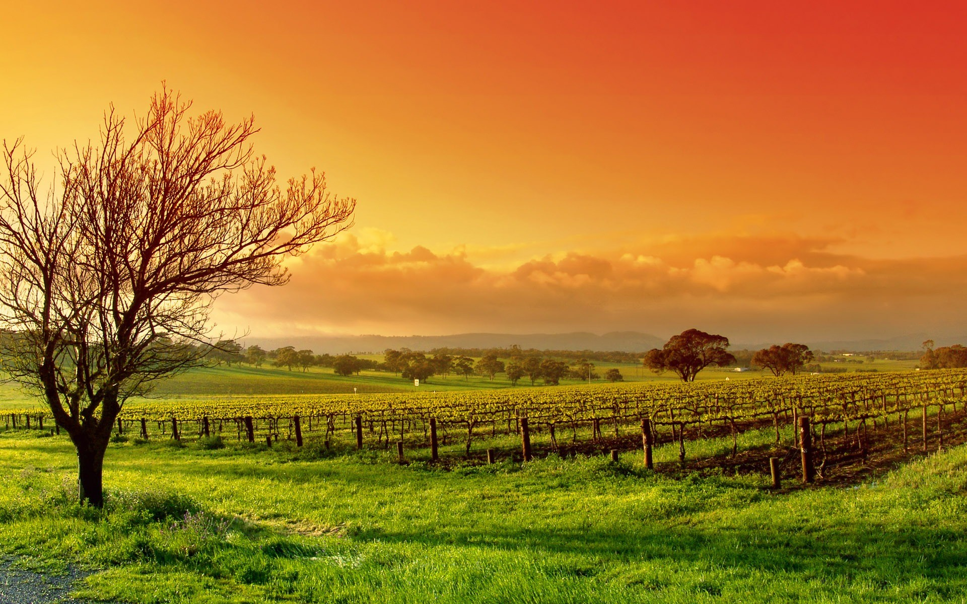 1920x1200 The Vineyard Wallpaper Other Nature Wallpapers