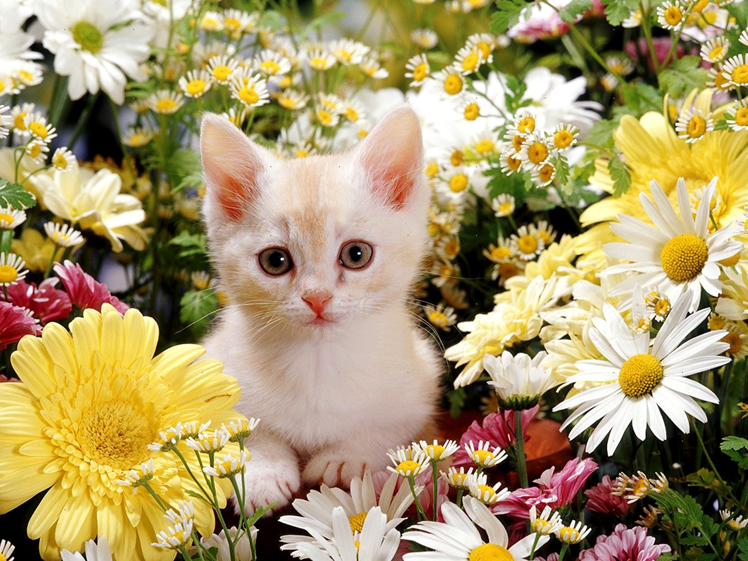 Kittens And Flowers Wallpaper 64 Images