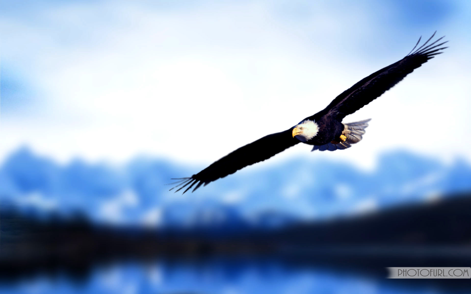 Golden Eagles Flying Wallpaper Eagle Desktop Wallpape...
