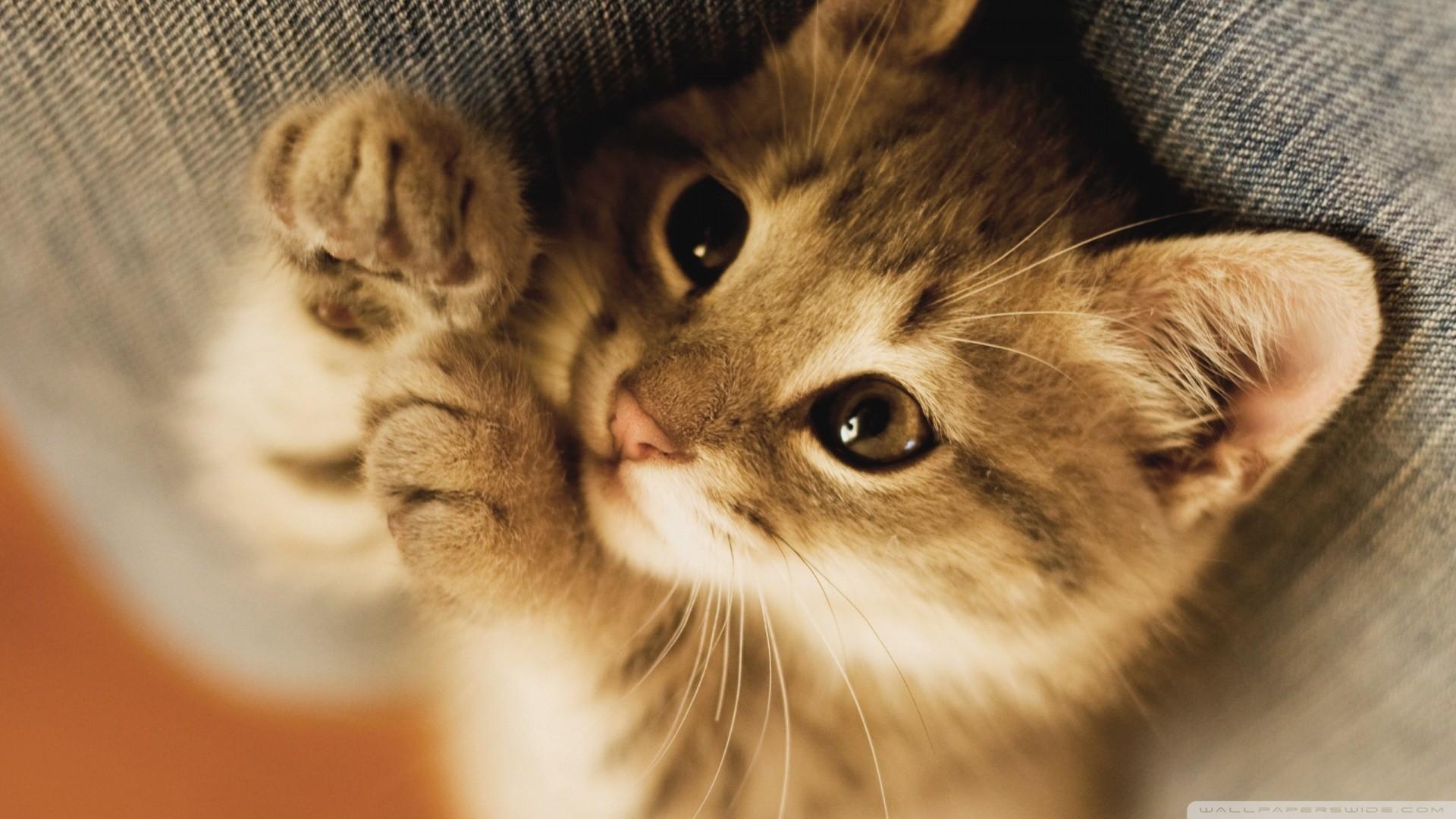 2133x1200 German Shepherd Dog Puppy Kitten Katty HD Wallpaper