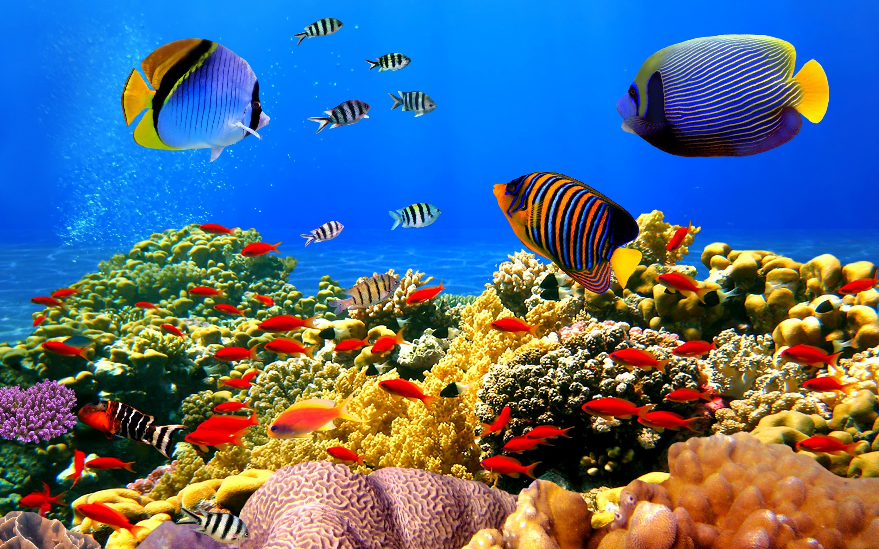 2880x1800 Colorful Coral Reef Wallpaper Desktop Background #6EZ